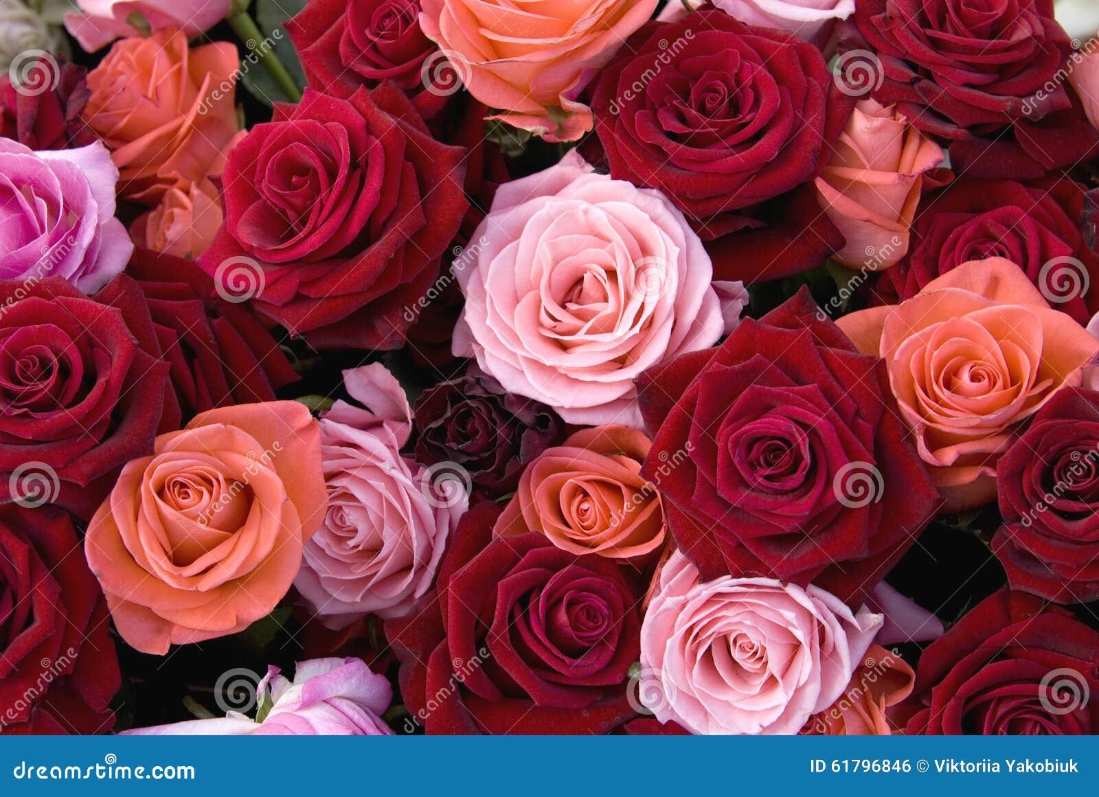 verschiedene farben von rosen stockfoto bild 61796846. Black Bedroom Furniture Sets. Home Design Ideas