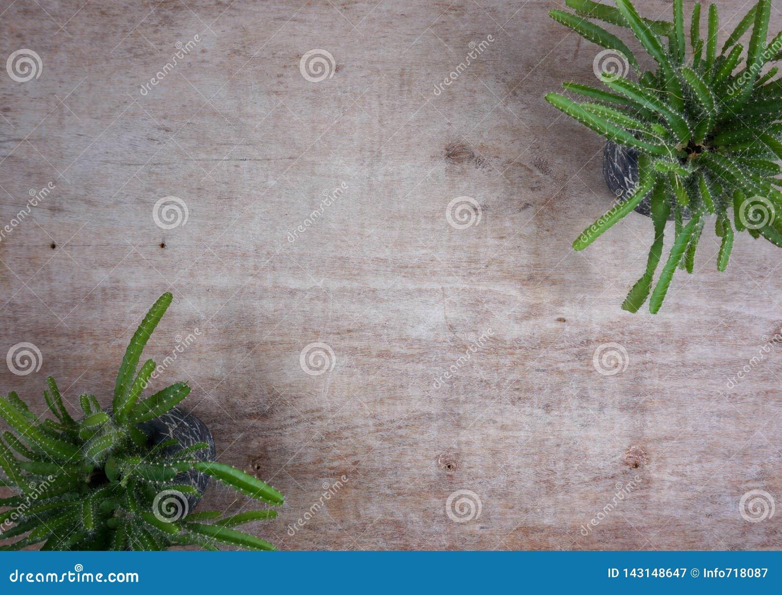 Verschiedene saftige Anlagen catus/in den Steint?pfen Minizimmerpflanzen auf h?lzernem Hintergrund mit Kopienraum f?r Ihren eigen