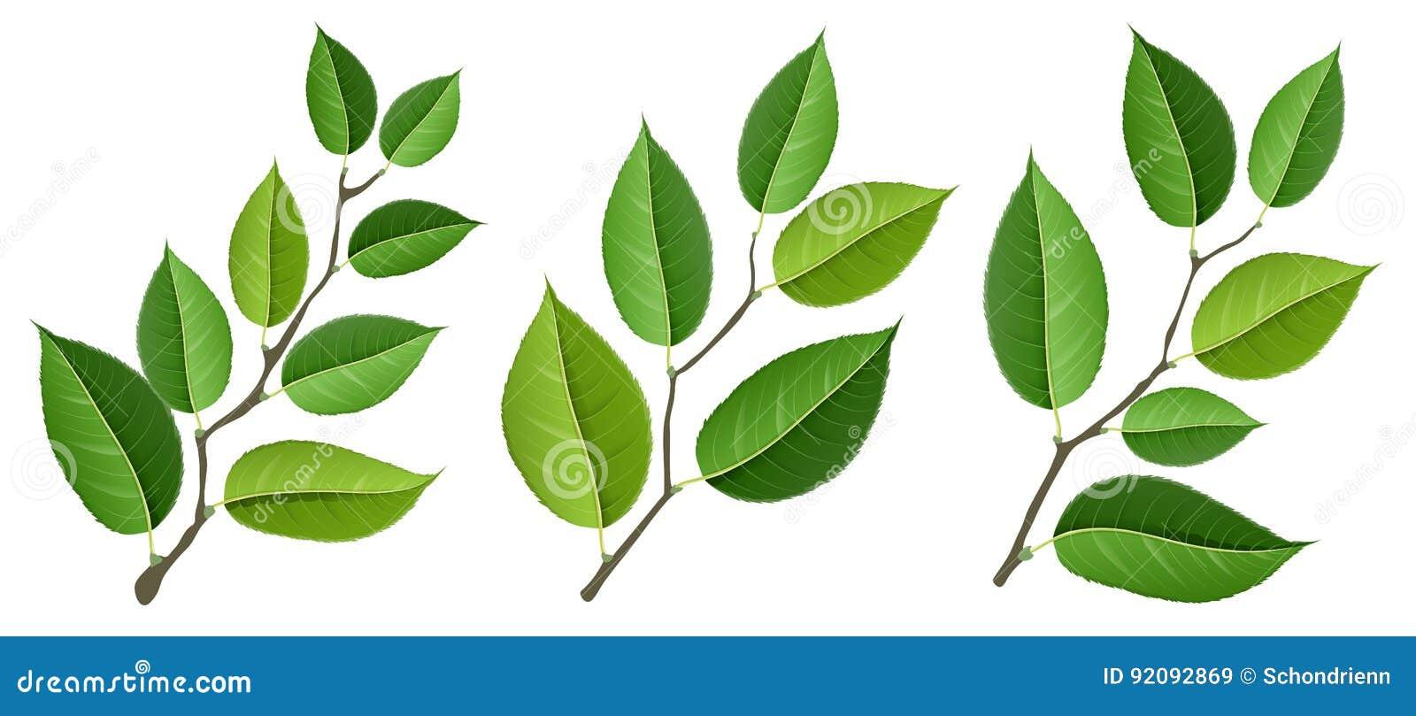 Verschillende die boomtak met groene die bladeren wordt geplaatst, op wit worden geïsoleerd