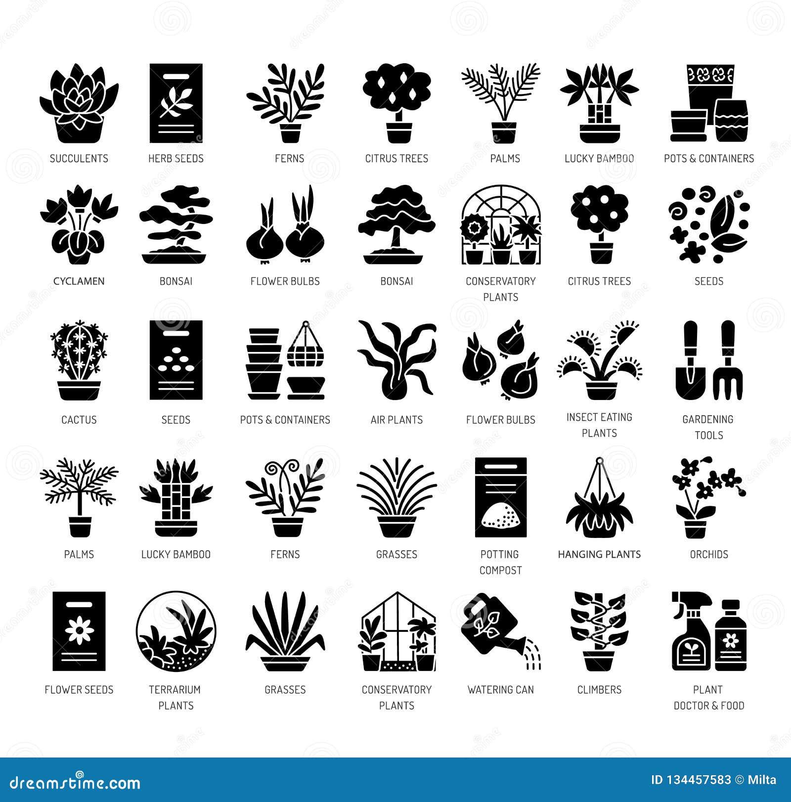 Verschillende soorten huisinstallaties in containers Succulent, cactus, bamboe, palm, varen Vector vlakke pictogramreeks Geïsolee