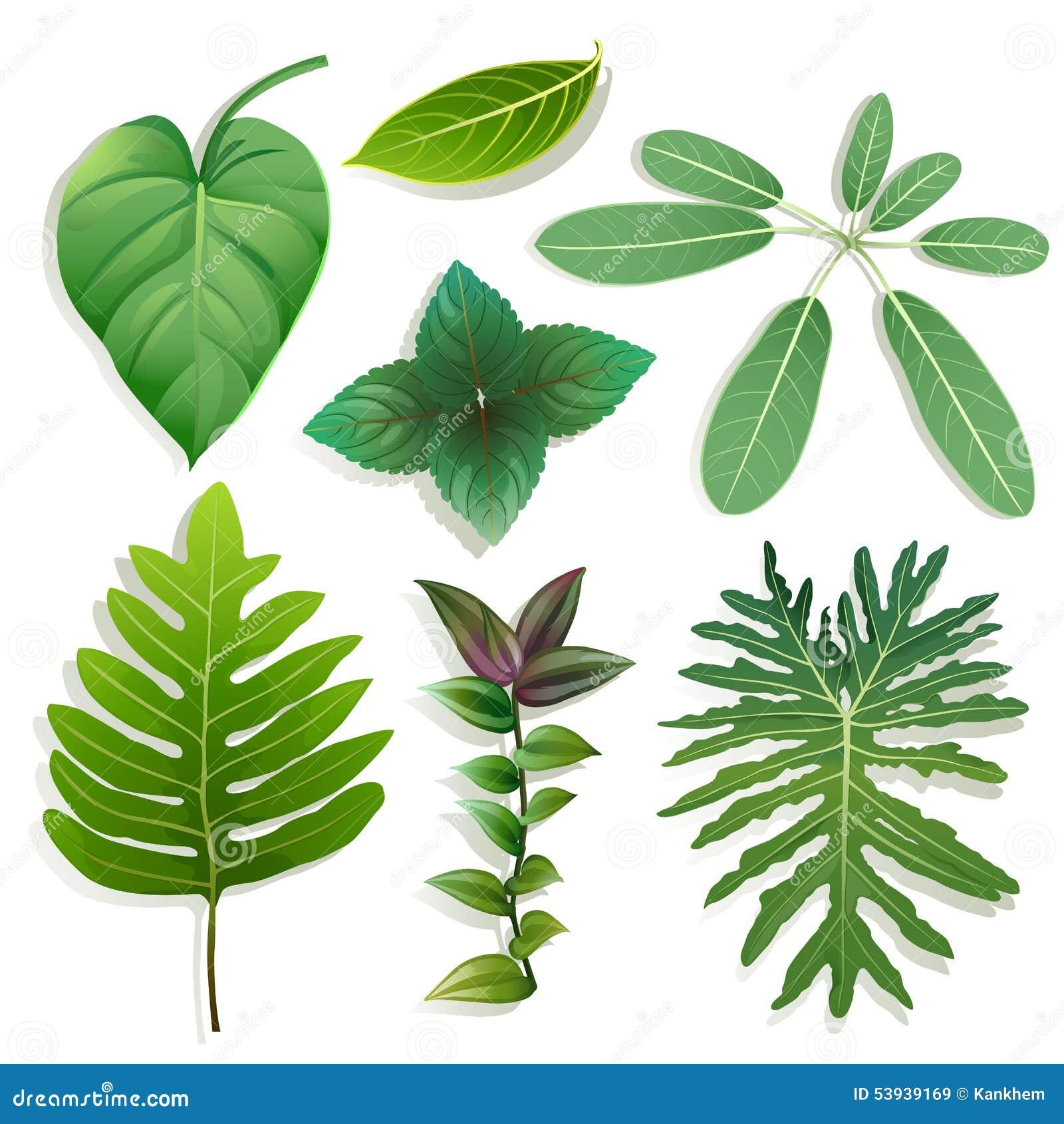 Verschillende vorm van bladeren