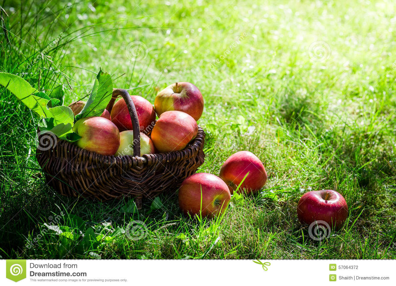 Verse appelen in zonnige dag