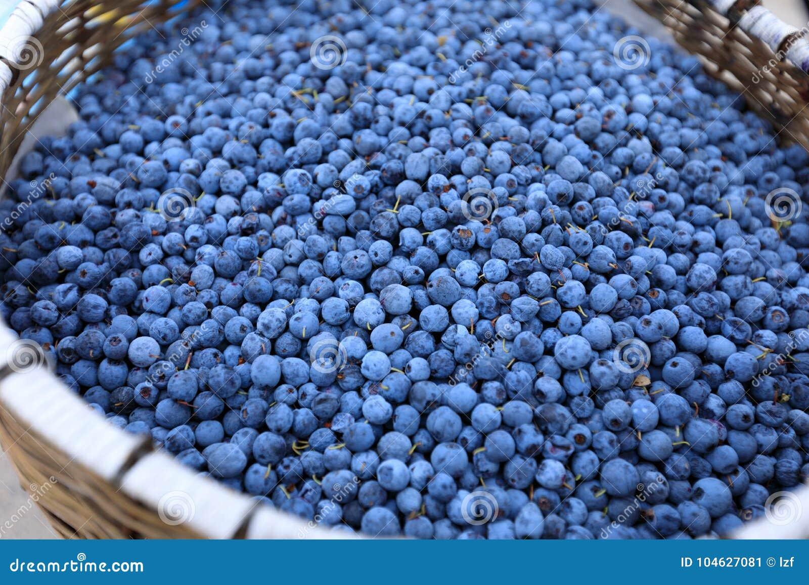 Download Verse bosbessenvruchten stock afbeelding. Afbeelding bestaande uit cuisine - 104627081