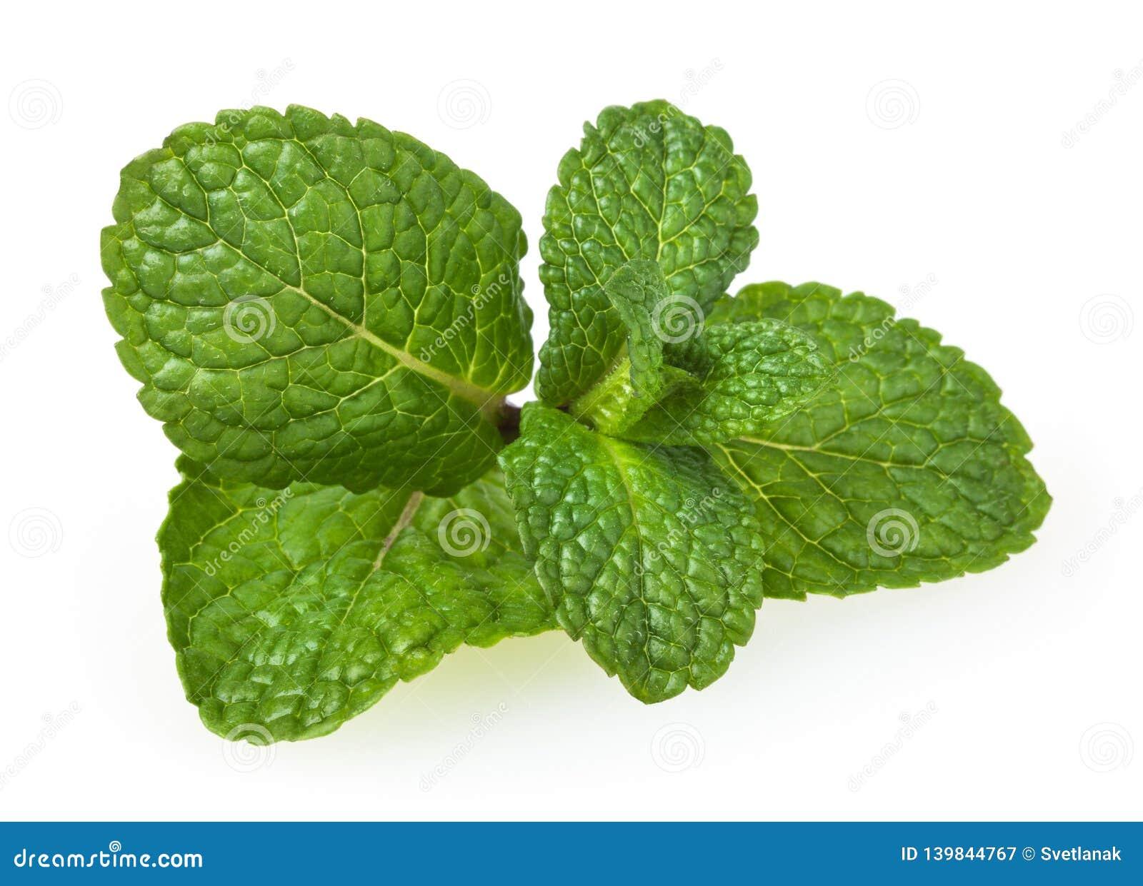 Verse die groene muntbladeren op wit worden geïsoleerd