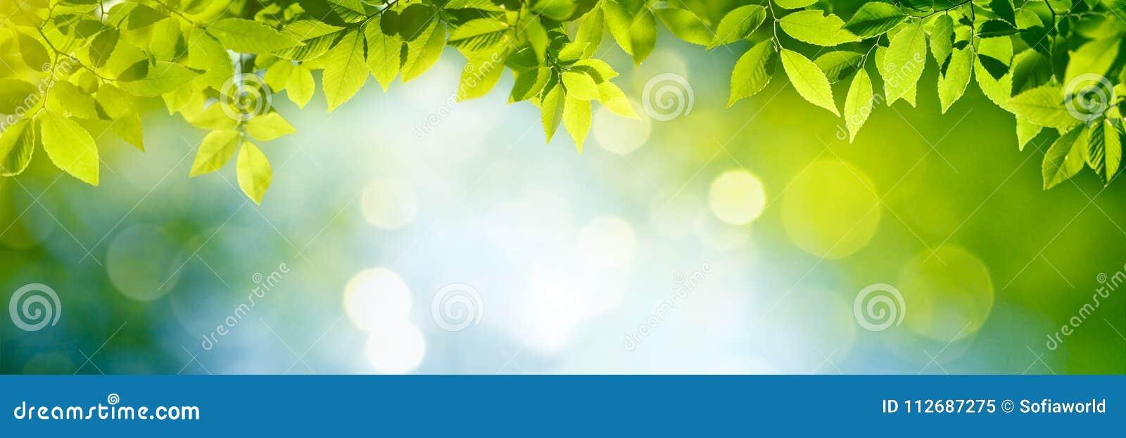 Verse en Groene Bladeren