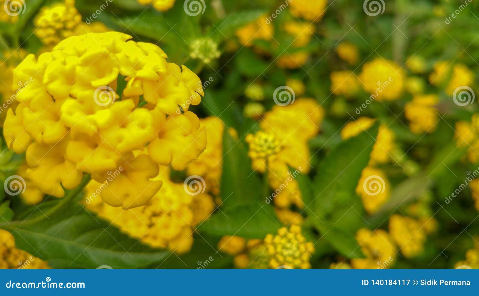 Verse en mooie gele bloemen met natuurlijke lichte achtergrond