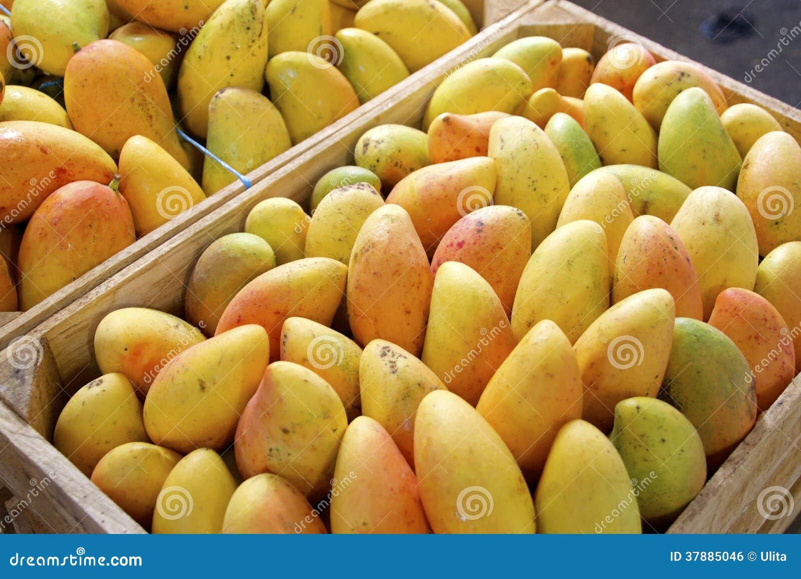 Verse gele mango s