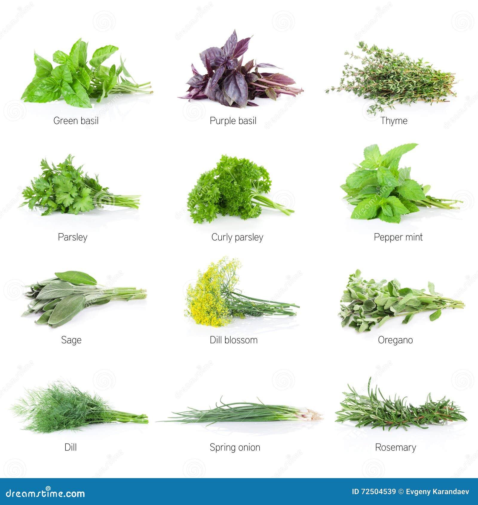 Different herbs royalty free stock image image 16265346 - Verse Geplaatste Tuinkruiden Royalty Vrije Stock Afbeeldingen