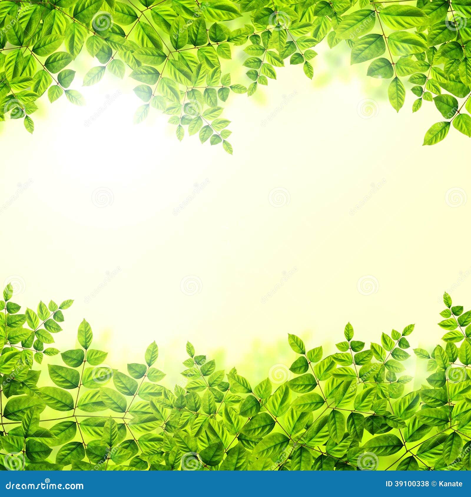 Verse Groene bladerenachtergrond