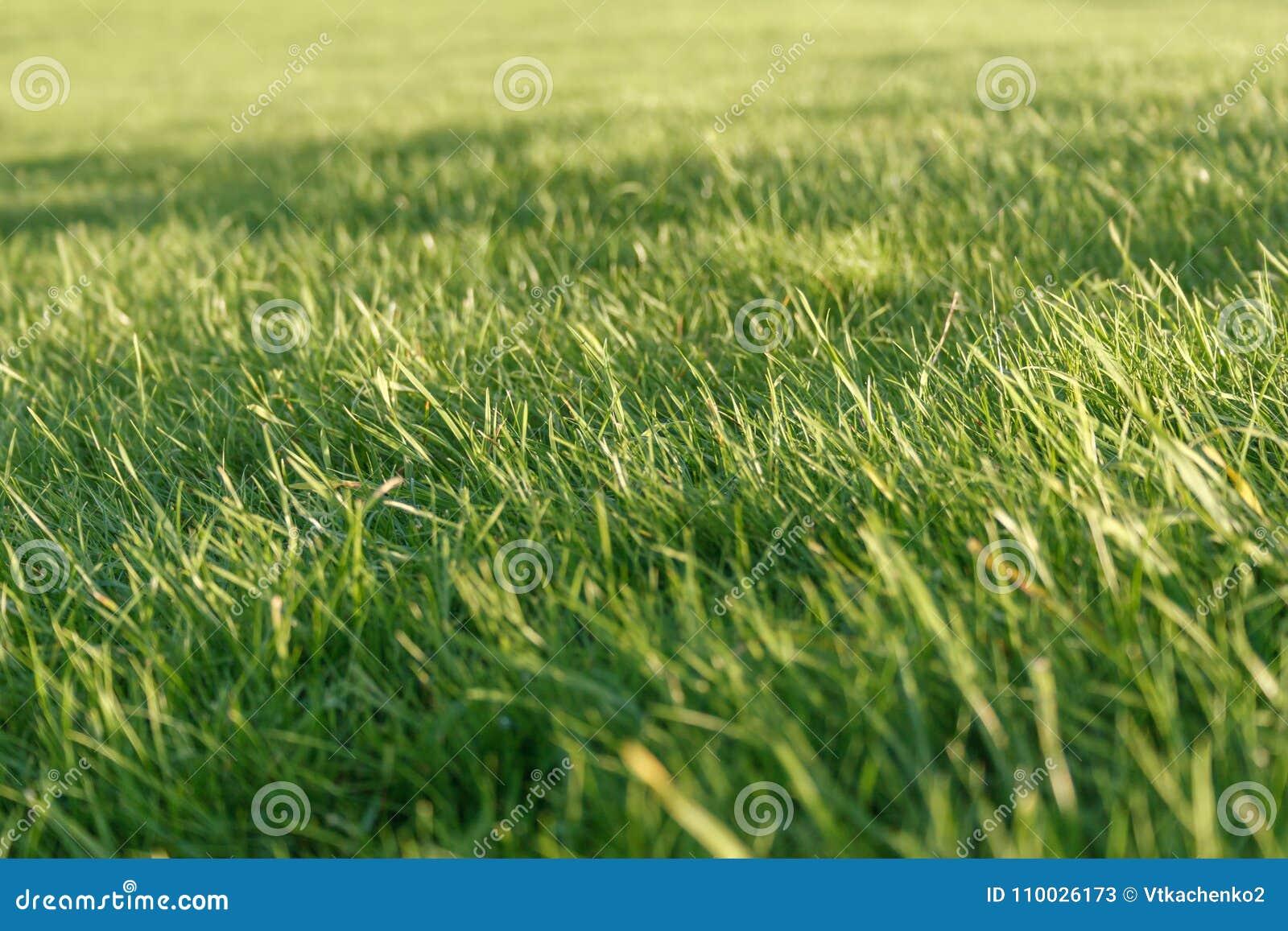Verse groene grasachtergrond