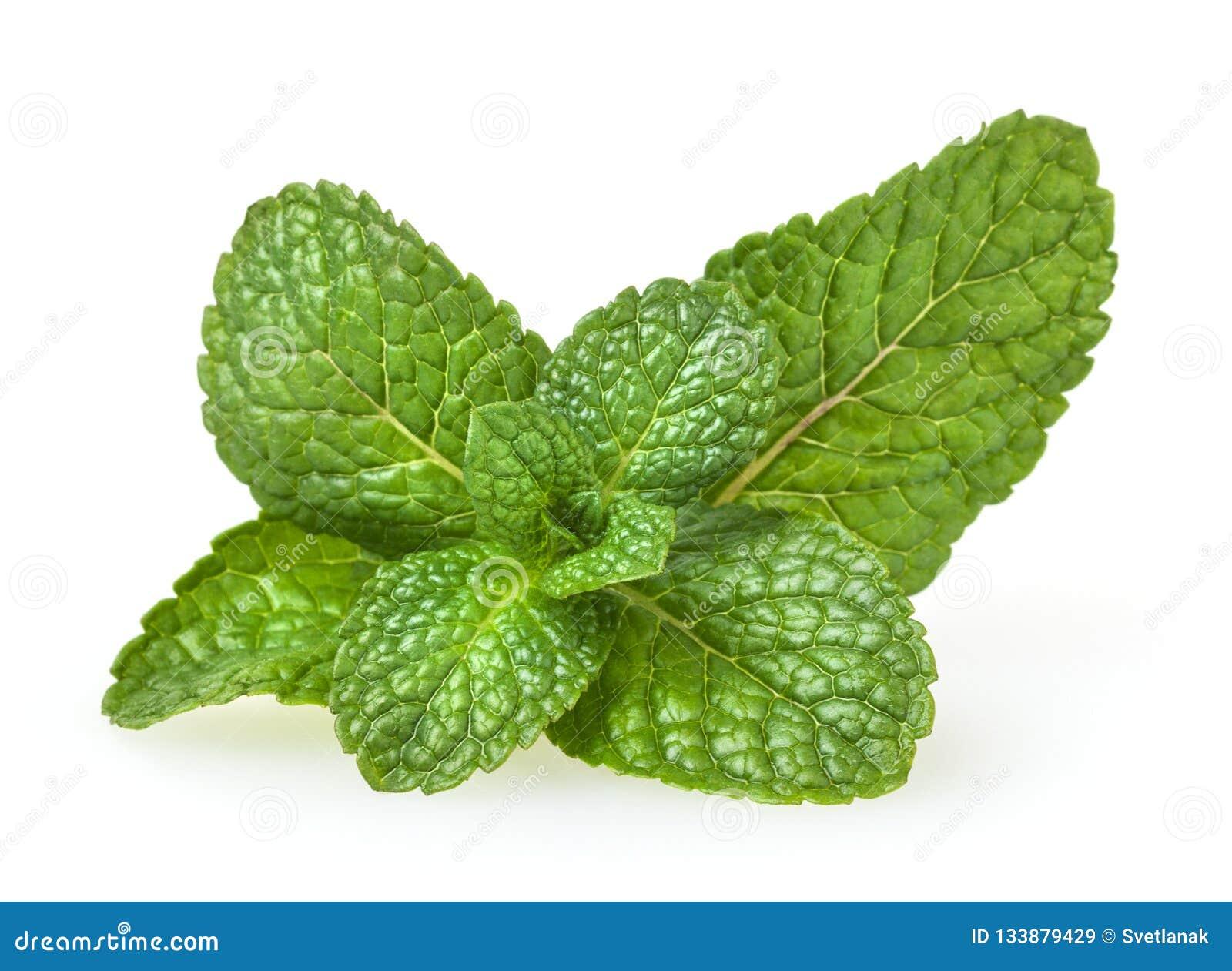 Verse groene muntbladeren op wit
