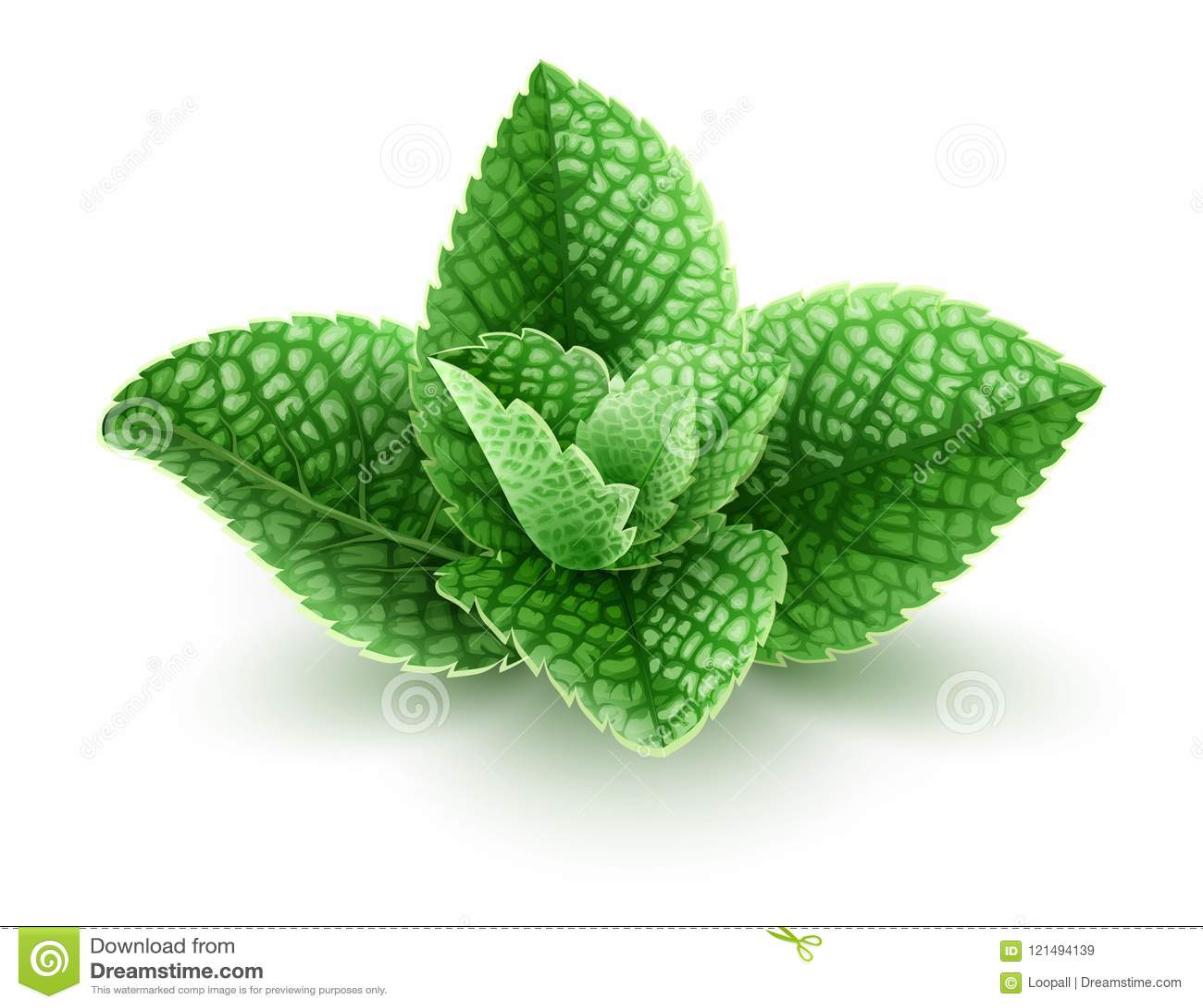 Verse groene muntbladeren voor mojitodrank