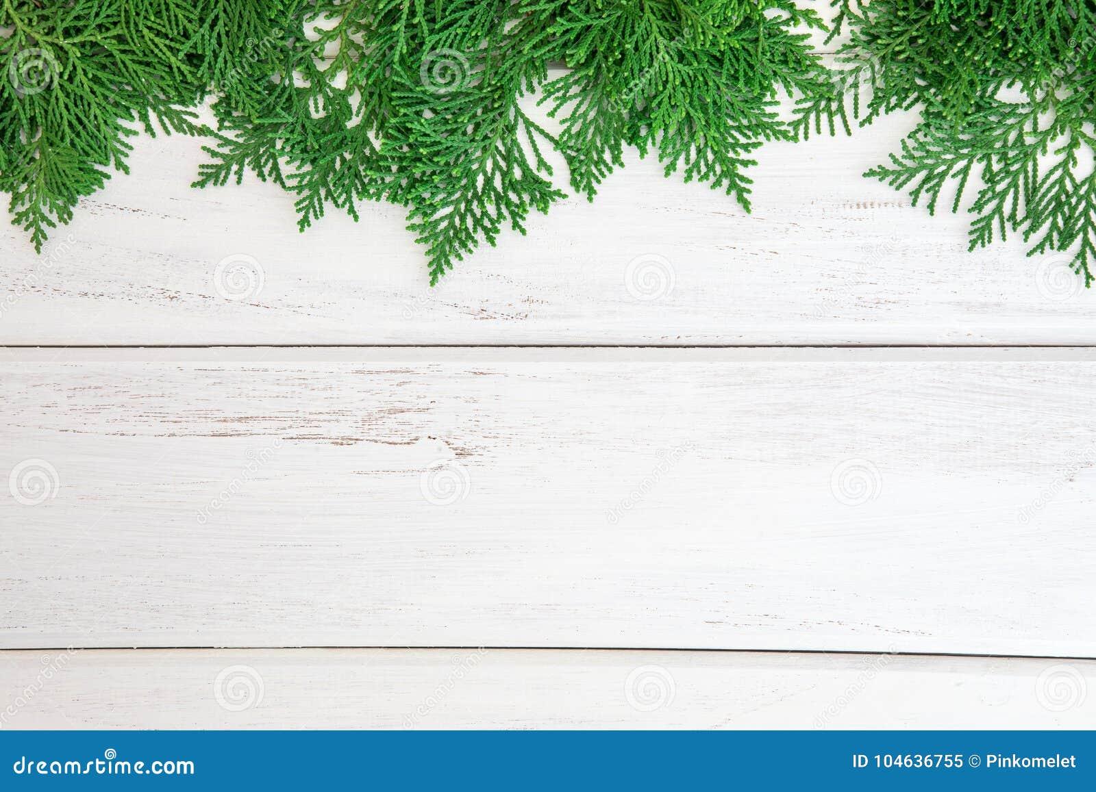 Download Verse Groene Pijnboombladeren, Oosterse Arborvitae, Thuja-orientalis Stock Afbeelding - Afbeelding bestaande uit kader, achtergrond: 104636755