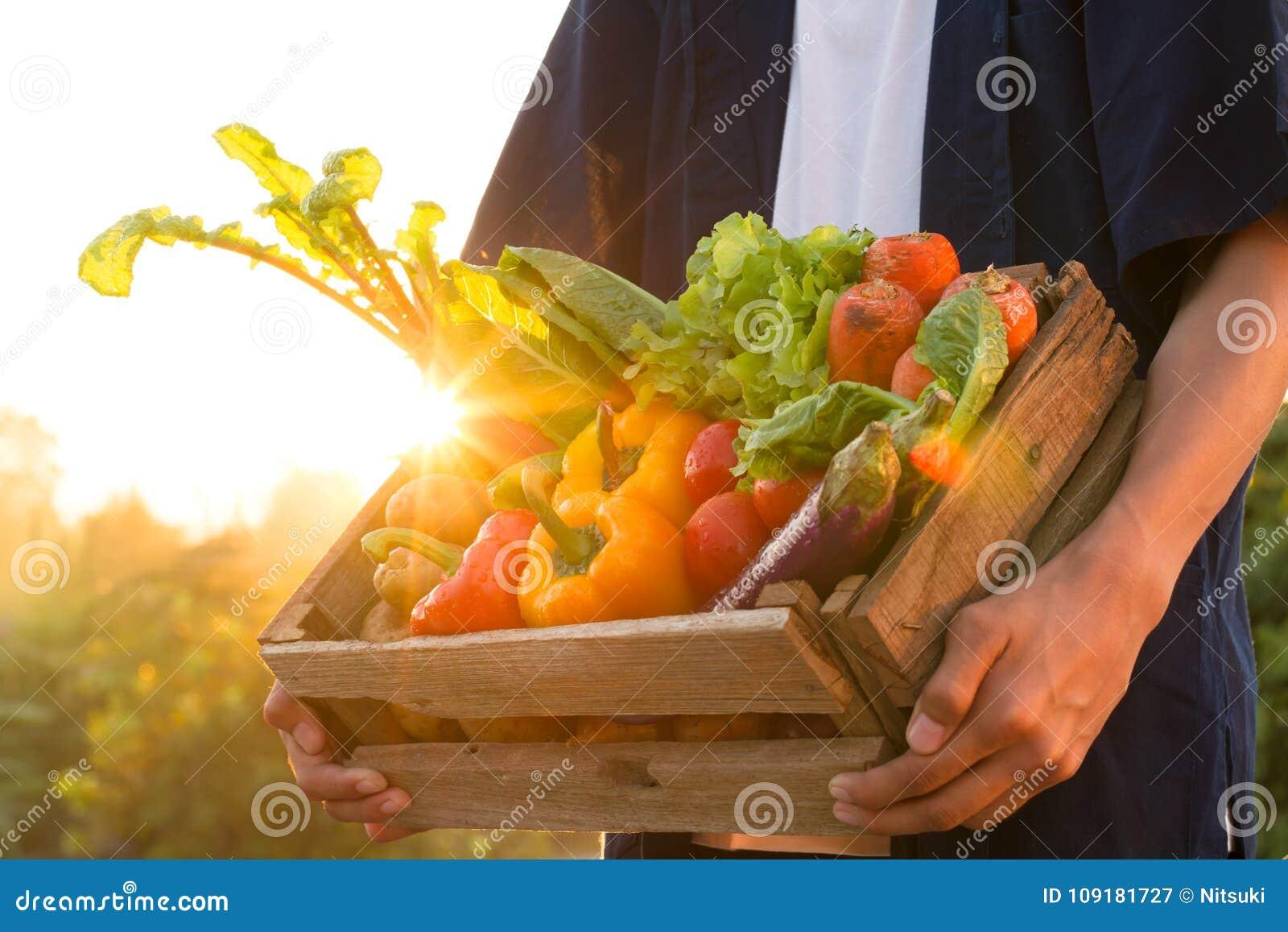 Verse groenten in houten doosholding door landbouwer bij mooie zonsondergang, moestuin en gezond het eten concept