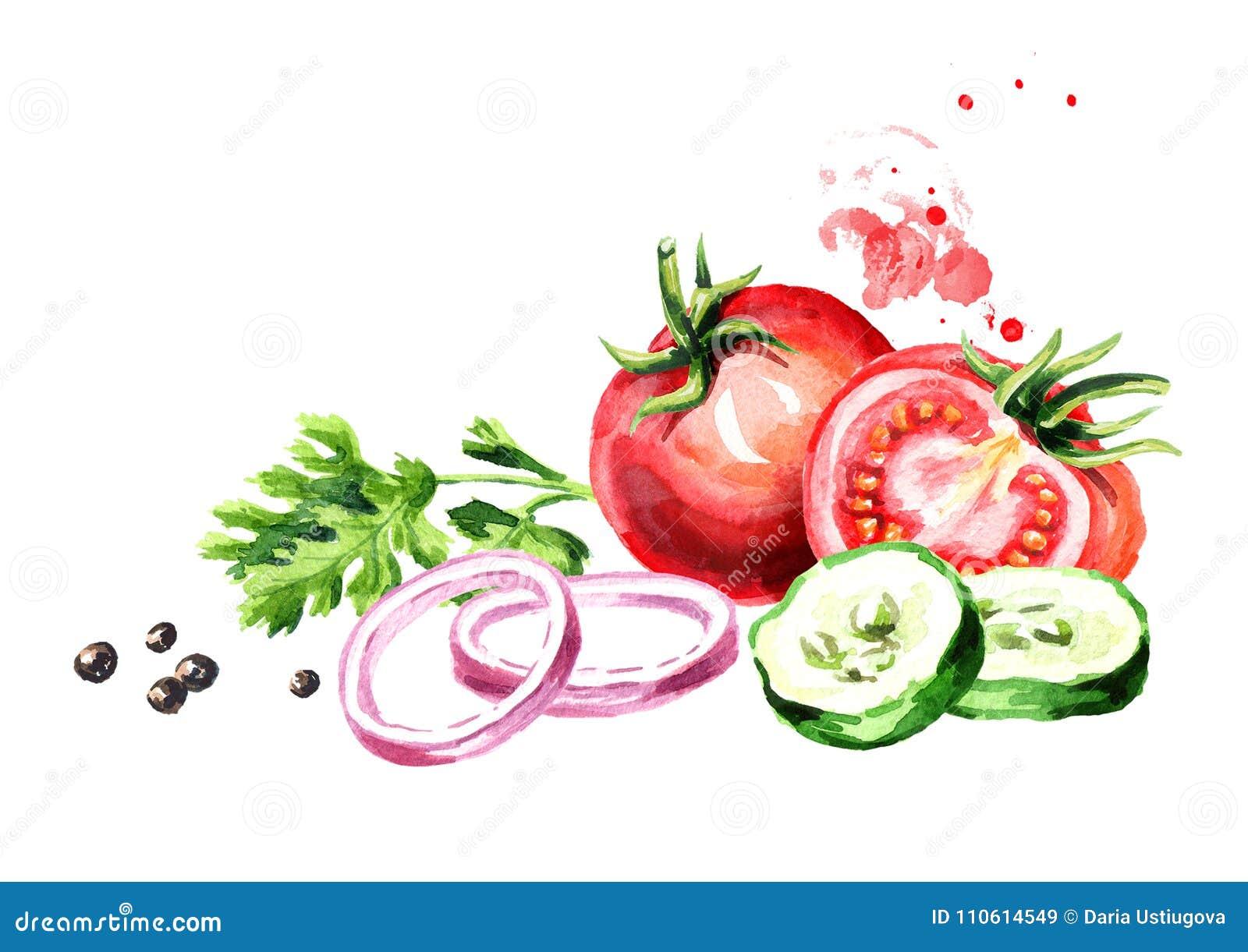 Verse groententomaten, komkommer, ui, peterselie, koriander, koriander, peper geïsoleerde waterverfhand getrokken illustratie,