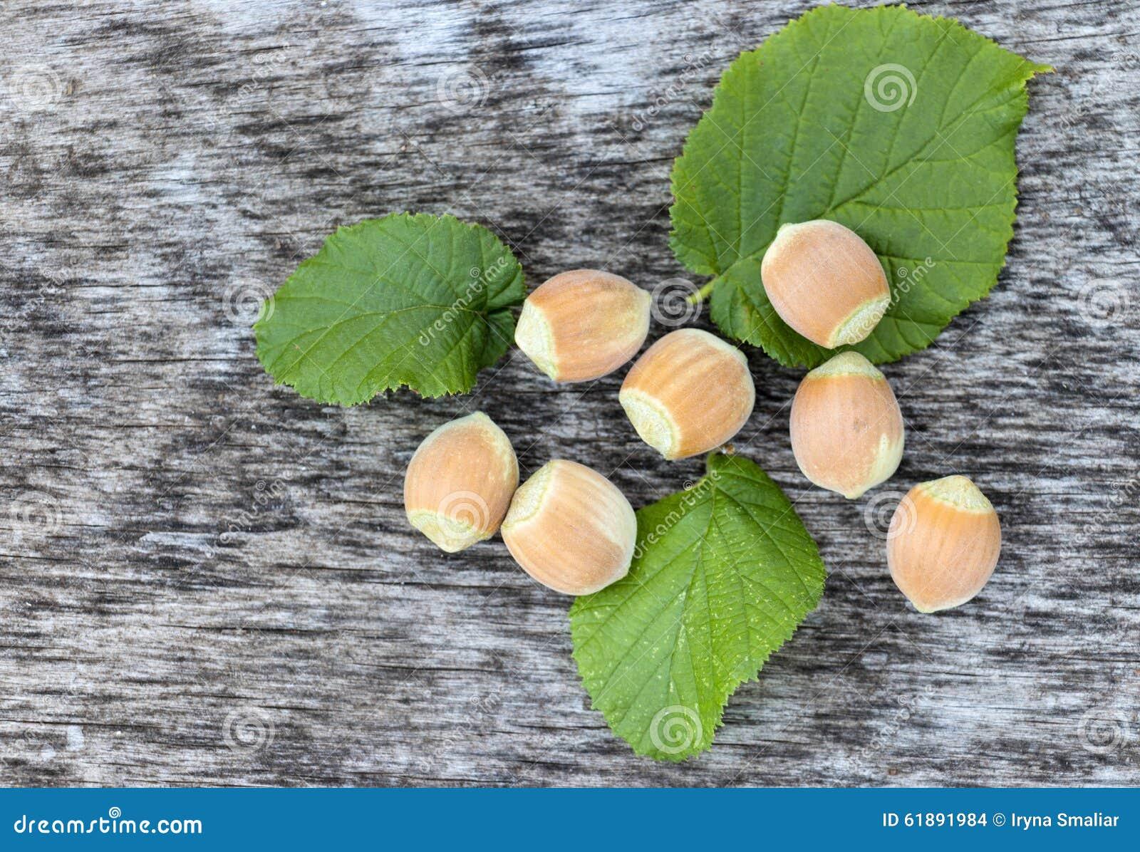 Verse hazelnoten met groene bladeren