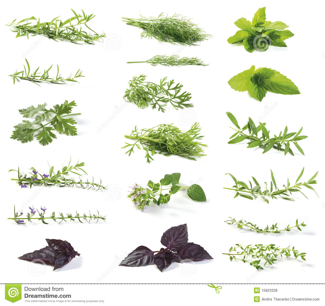 Different herbs royalty free stock image image 16265346 - Verse Kruiden Royalty Vrije Stock Foto S
