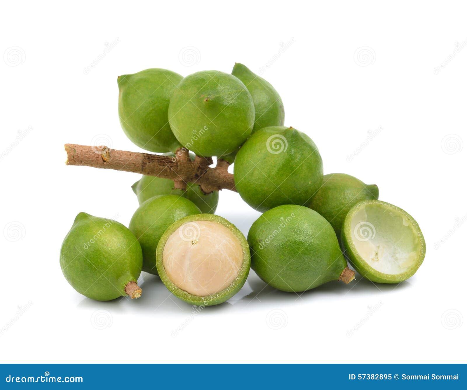 Verse macadamia noot op witte achtergrond