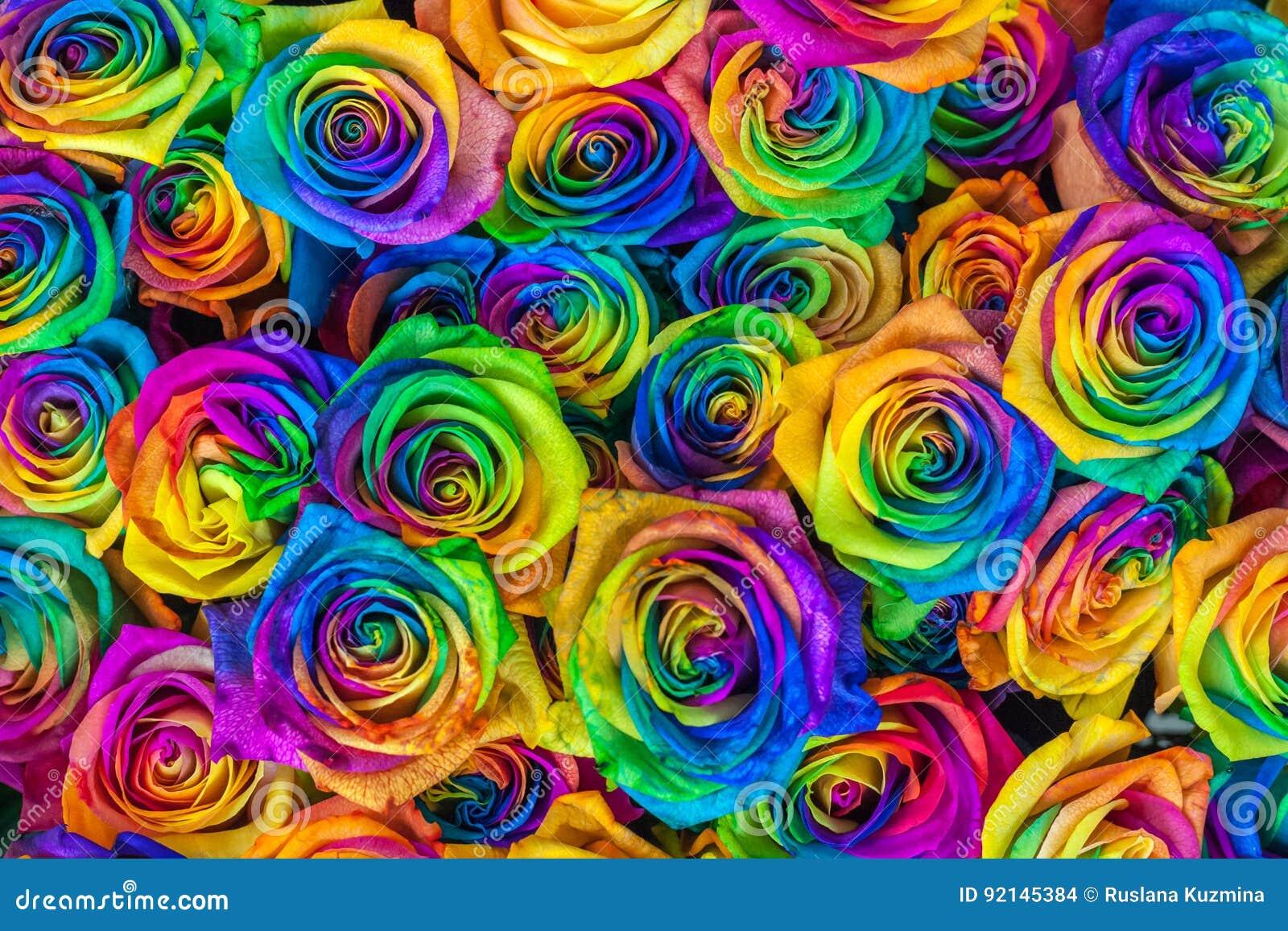 Verse mooie trillende veelkleurige rozenbloemen voor bloemenachtergrond De regenboog kleurde unieke en speciale rozen bovenkant