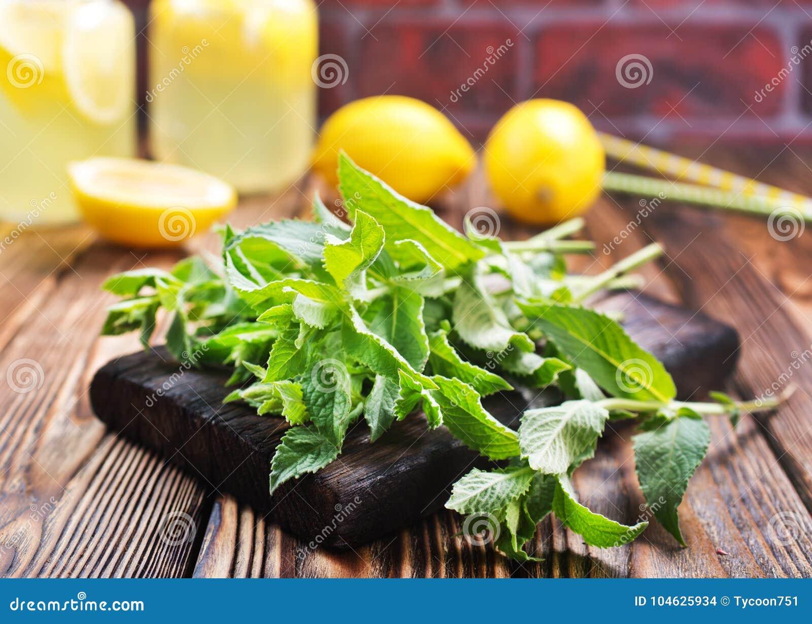 Download Verse munt stock foto. Afbeelding bestaande uit gardening - 104625934