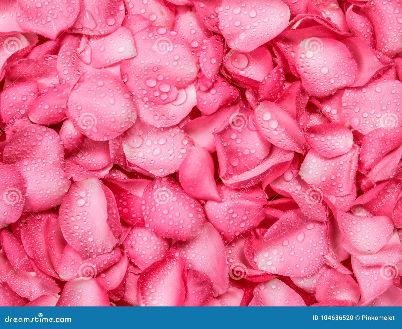 Download Verse Roze Nam Bloemblaadjeachtergrond Met De Daling Van De Waterregen Toe Stock Foto - Afbeelding bestaande uit liefde, bloemen: 104636520