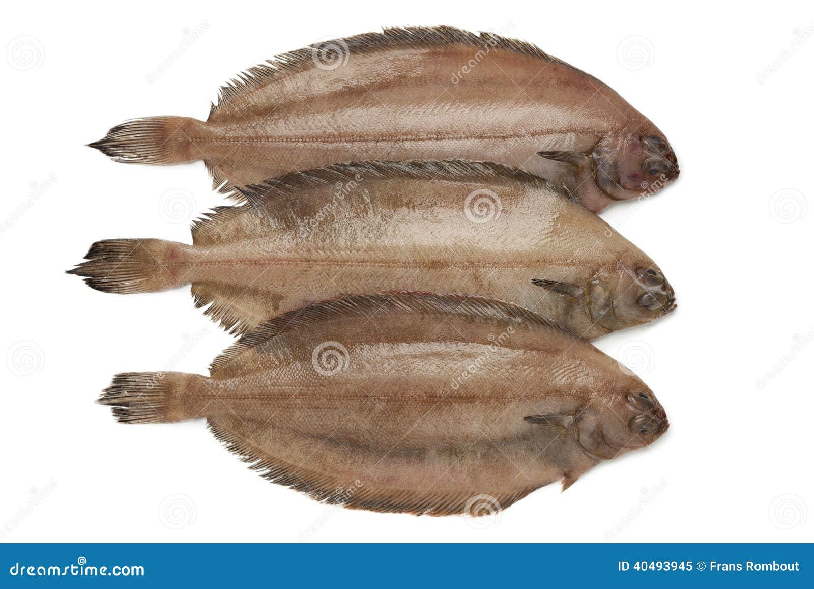 Verse ruwe megrim vissen