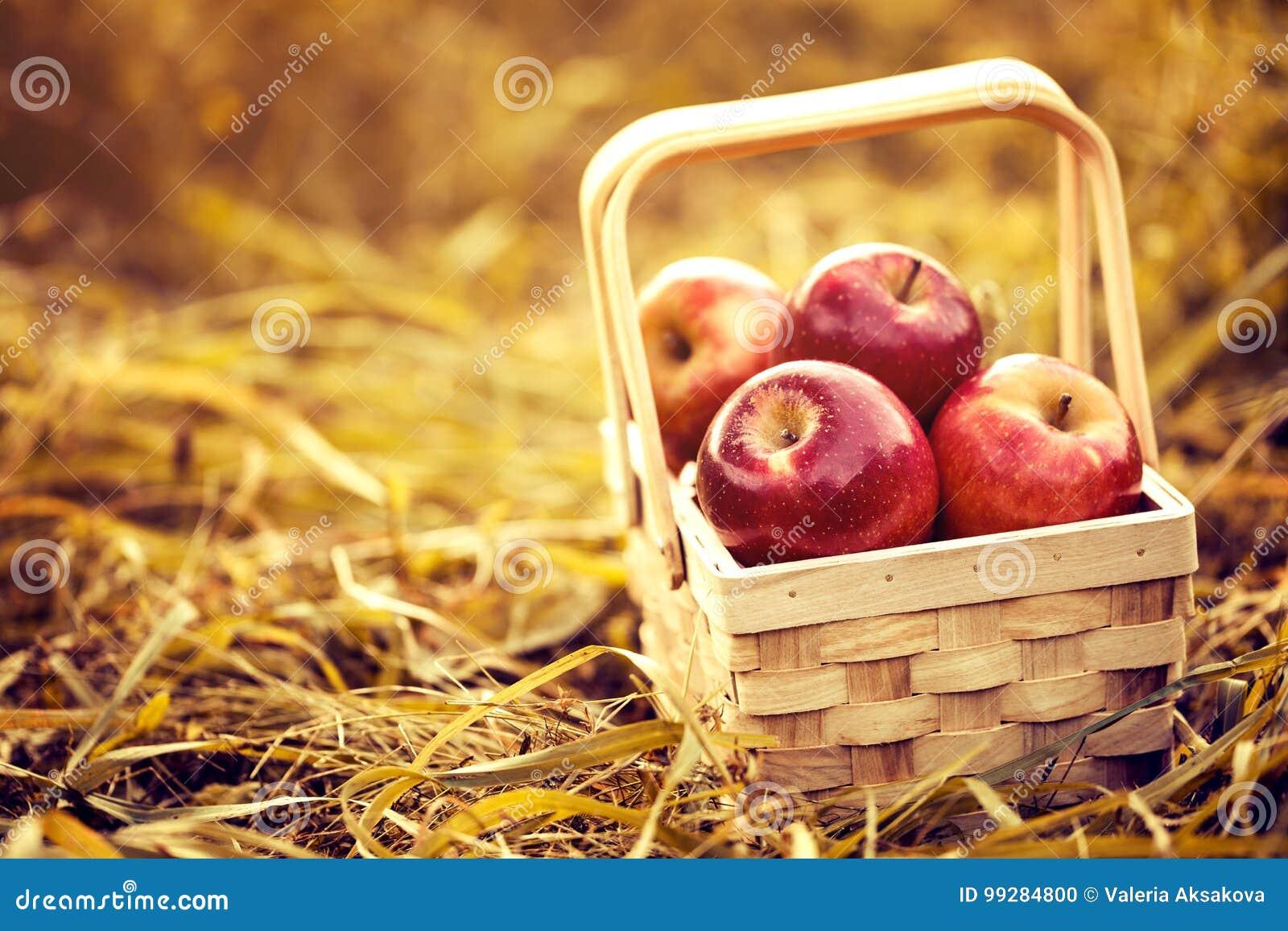 Verse Smakelijke Rode Appelen in Houten Mand op Rood Autumn Background
