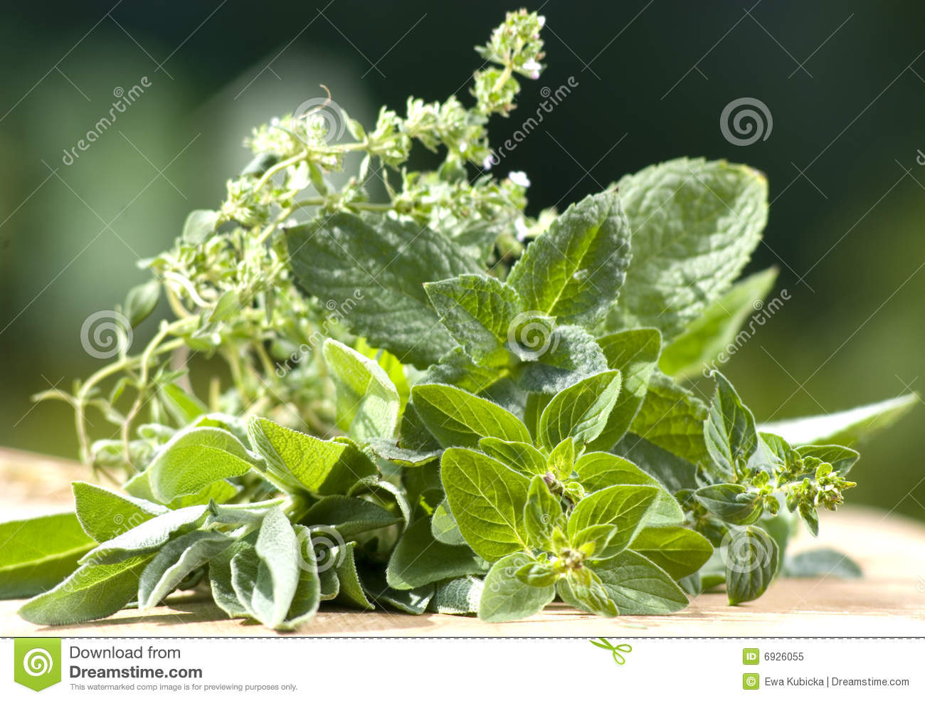 Different herbs royalty free stock image image 16265346 - Verse Tuinkruiden Royalty Vrije Stock Foto