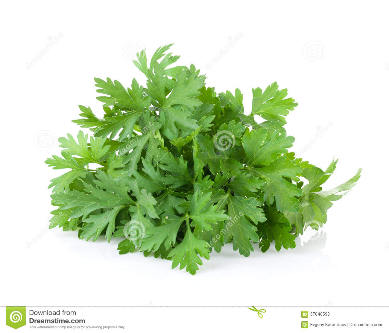 Different herbs royalty free stock image image 16265346 - Verse Tuinkruiden Peterselie Stock Foto S
