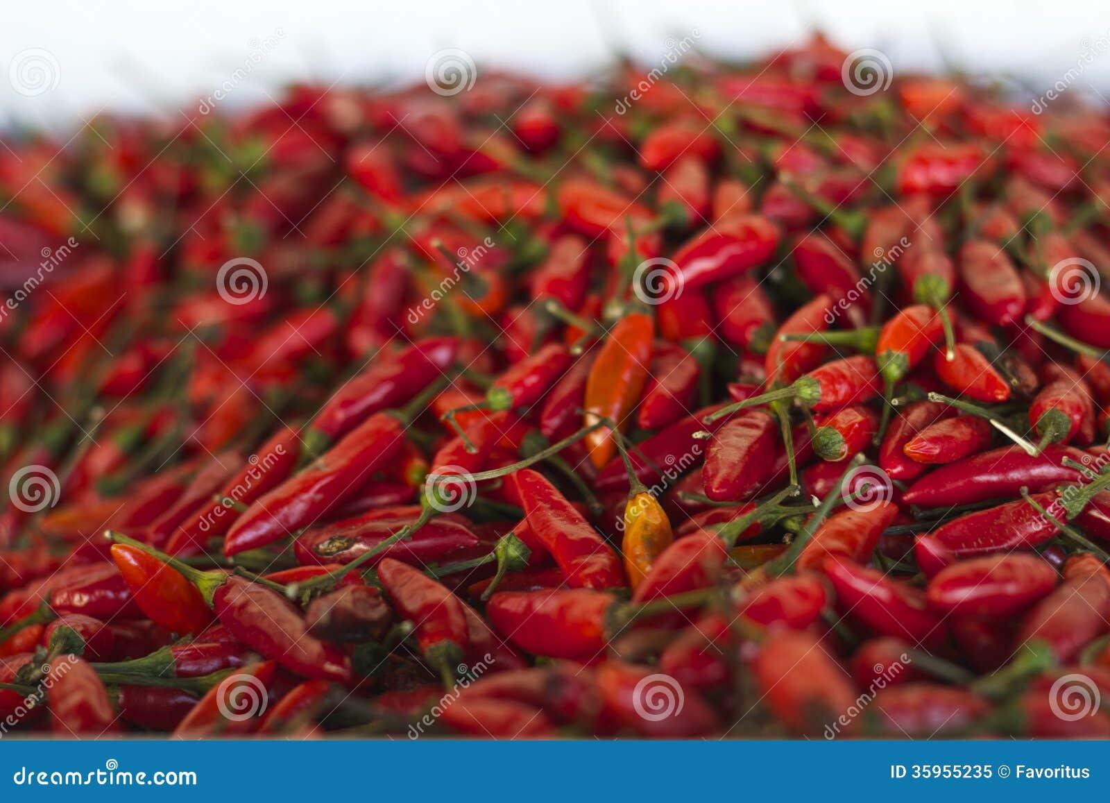 Verse van de paprikakruiden van de spaanse peperpeper van de ...