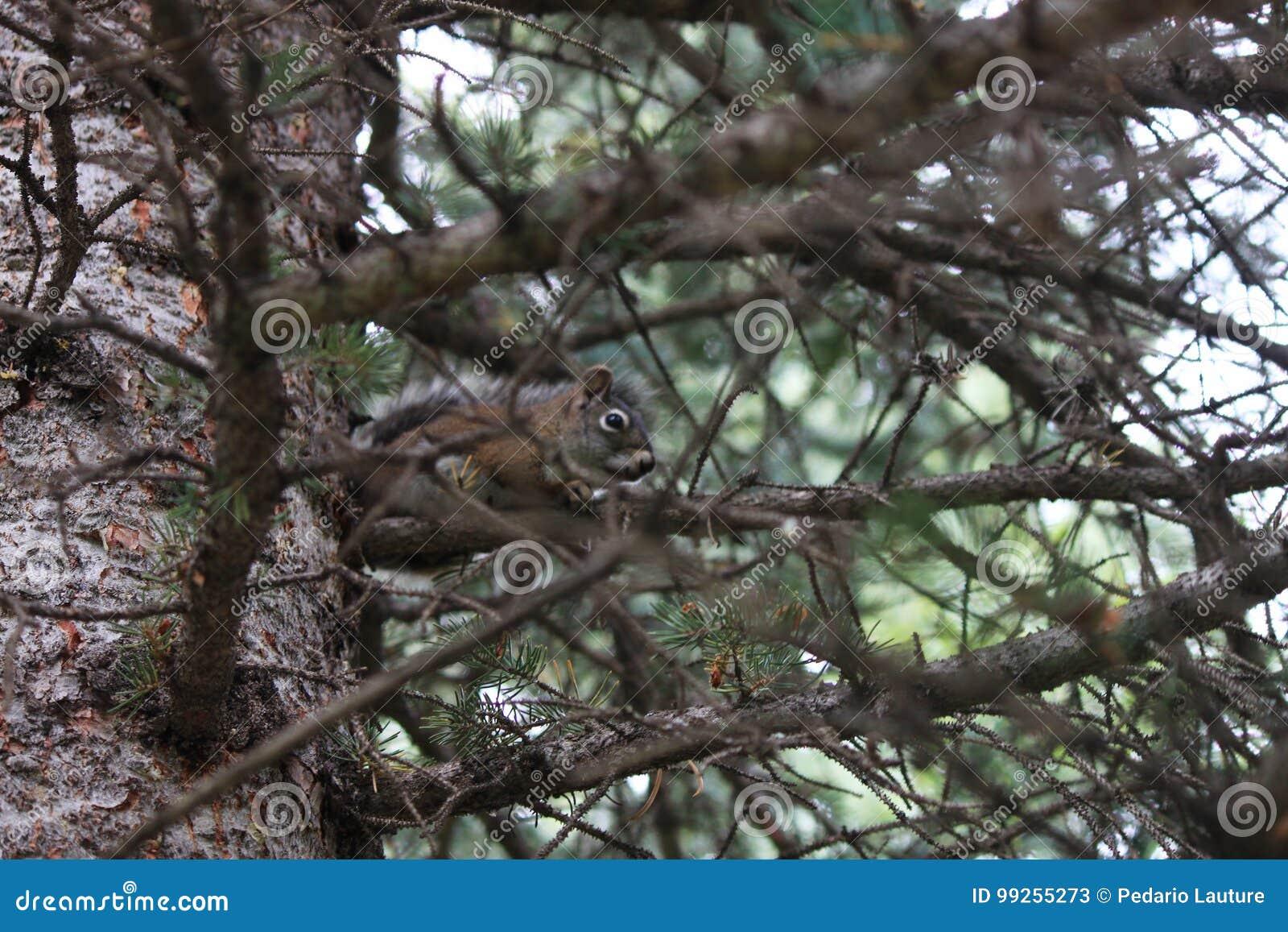Verstecken-Eichhörnchen
