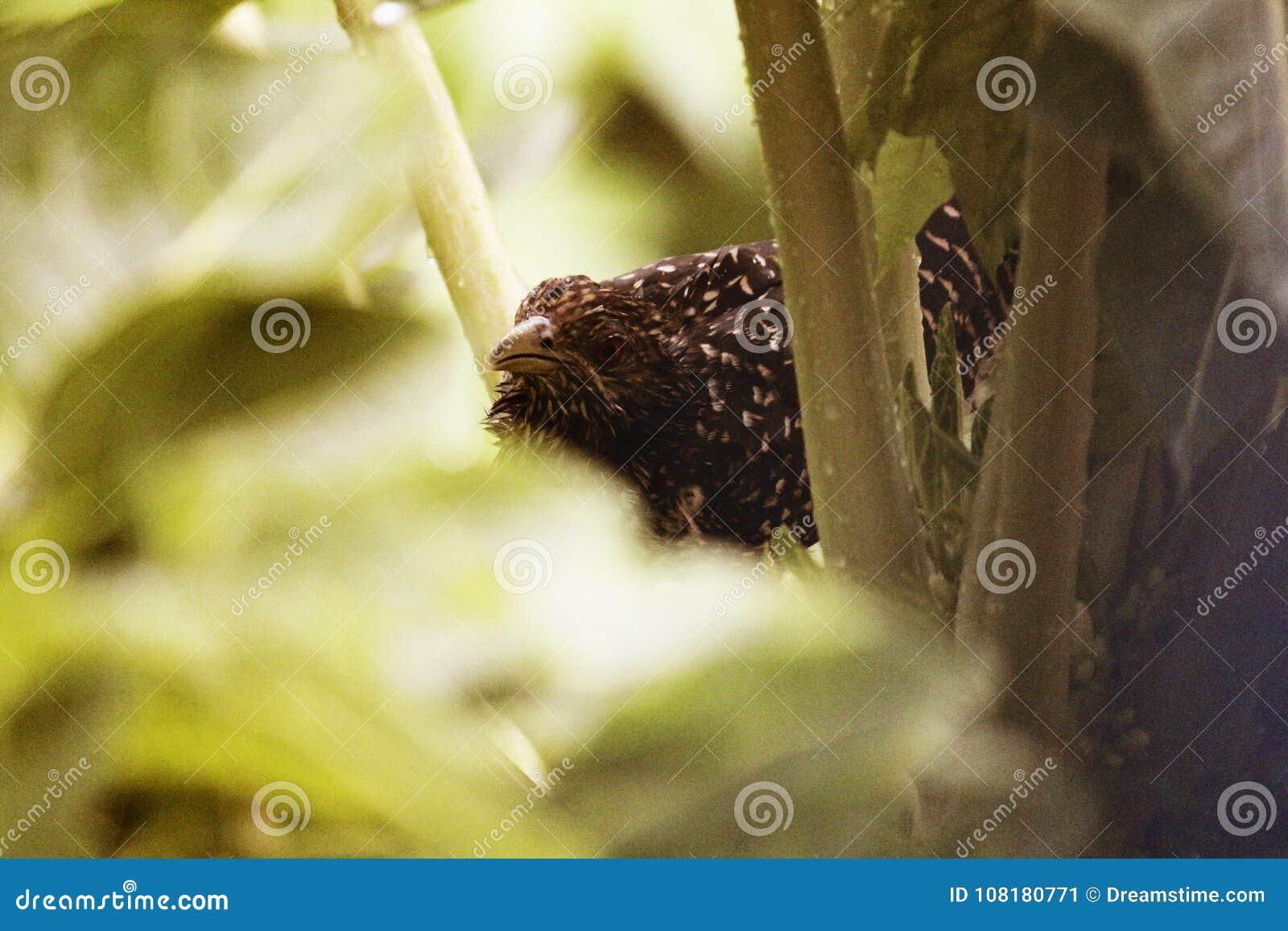 Versteckender Vogel hinter Niederlassungen