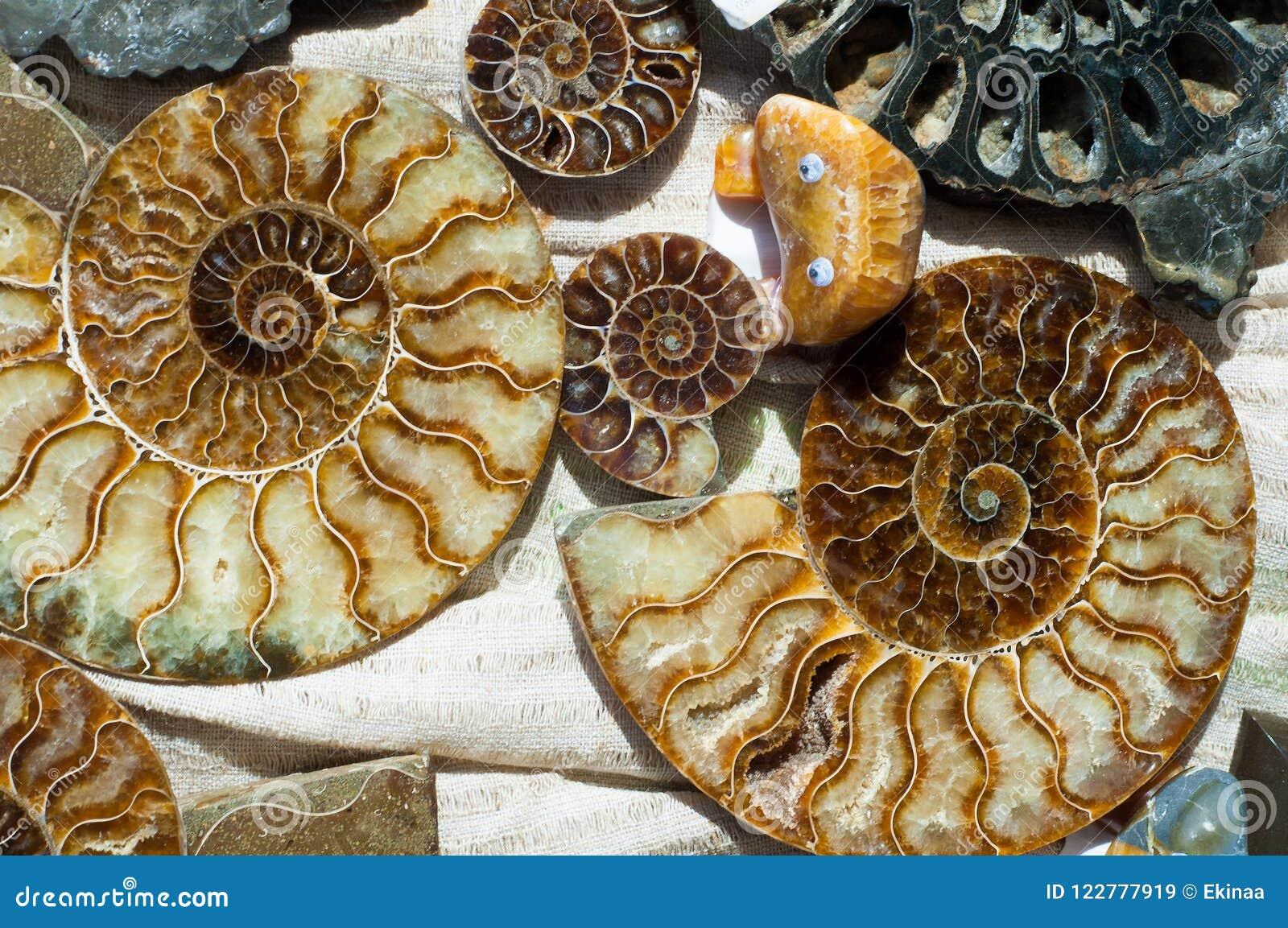 Versteinert bleibt vom Meeresflora und -fauna die Überreste oder der Eindruck einer PR