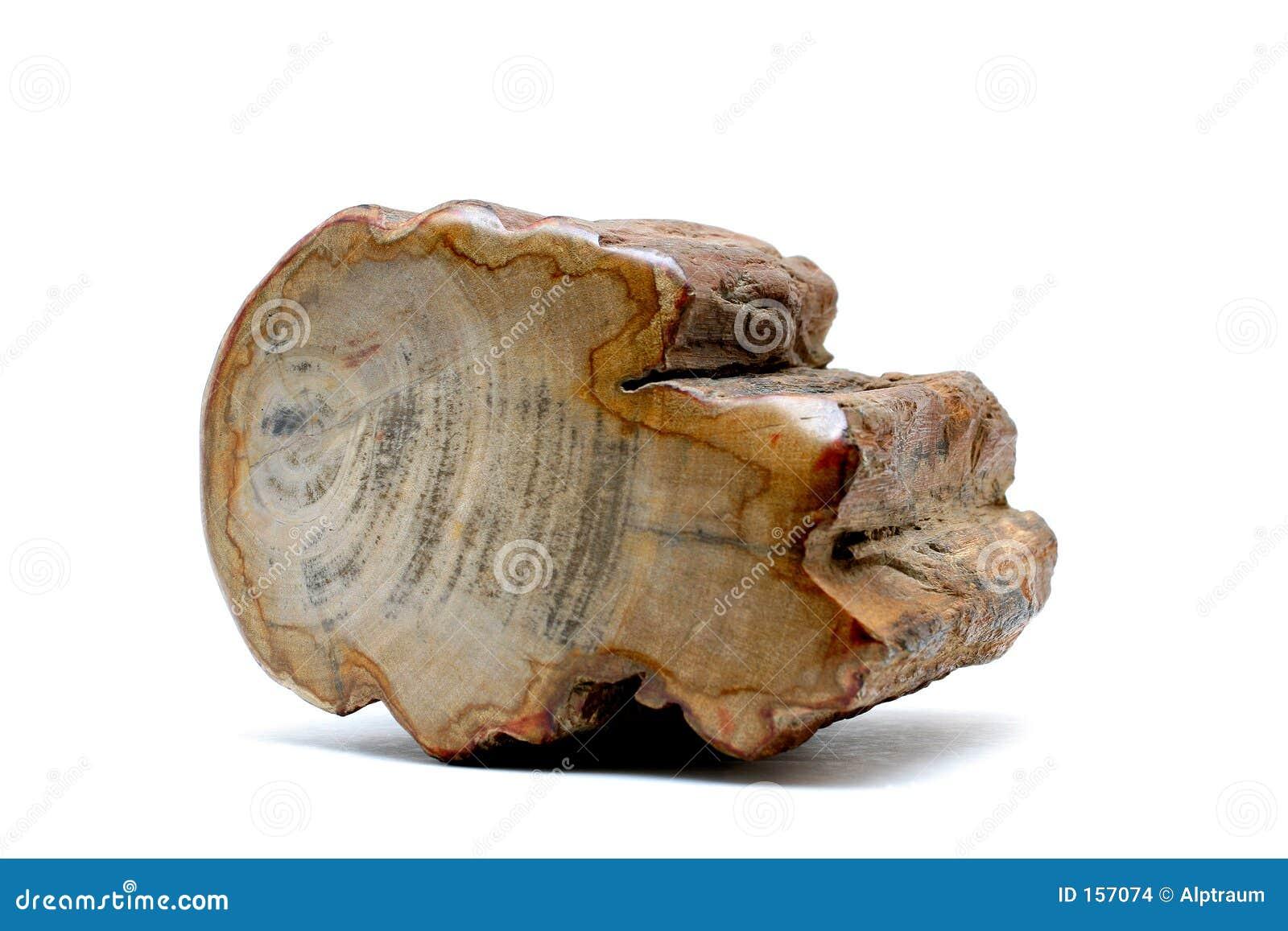 Versteinertes Holz Stockbilder  Bild 157074
