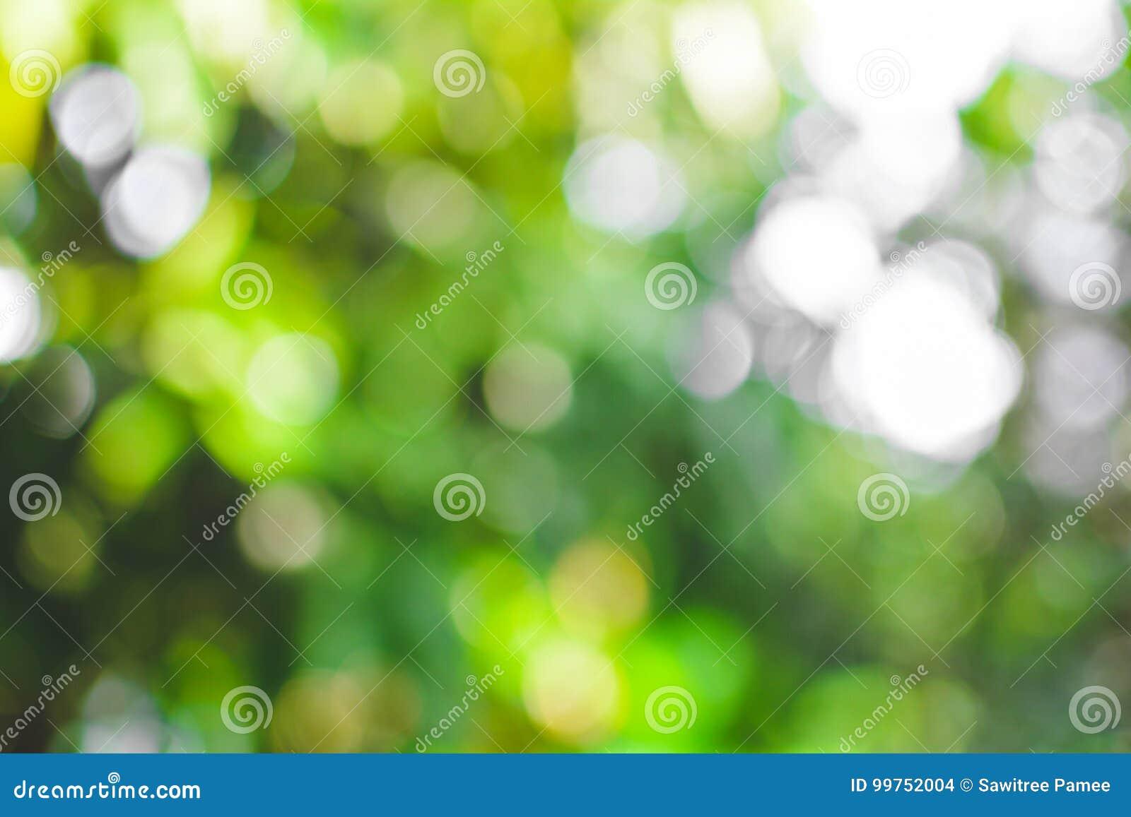 Vert de résumé de fond de bokeh d arbre