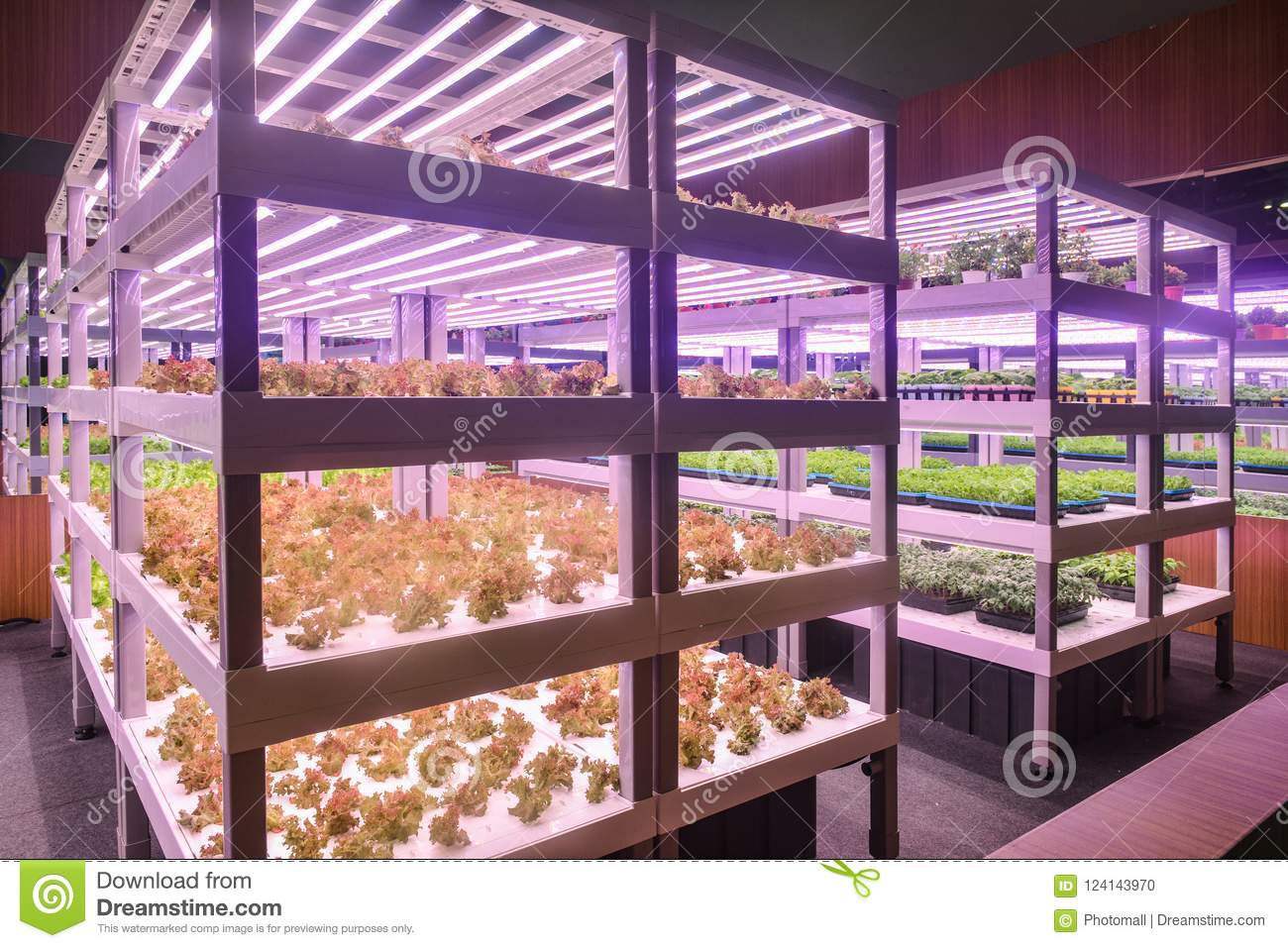 Vertical agriculture Plant factory