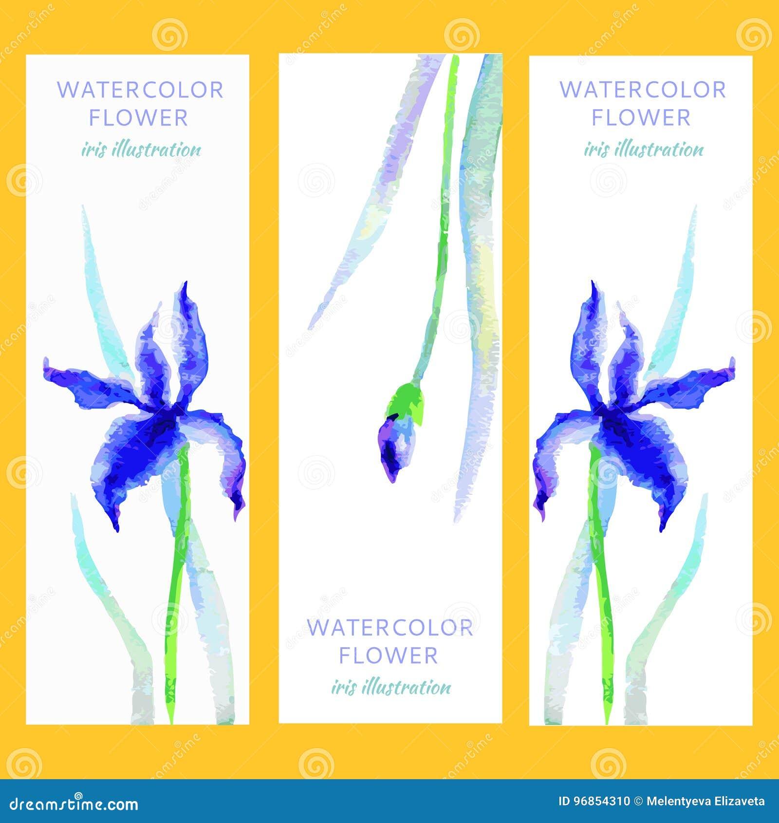 Blue iris flower border white background stock illustrations 40 blue iris flower border white background stock illustrations 40 blue iris flower border white background stock illustrations vectors clipart izmirmasajfo