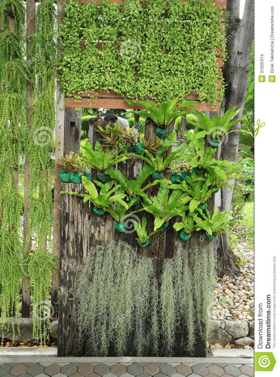 Vertical Garden Stock Photo Image Of Asia Bright Leafy 31925414