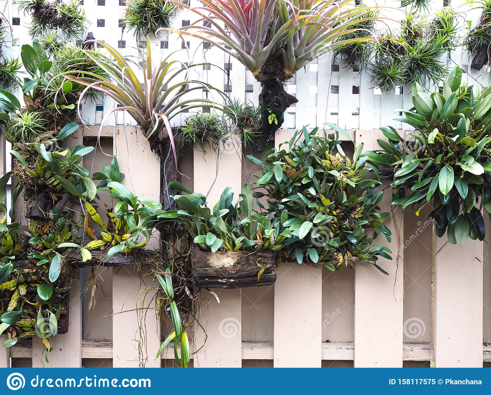 Vertical Garden Decoration On The Wall Stock Image Image Of Orchid Fresh 158117575