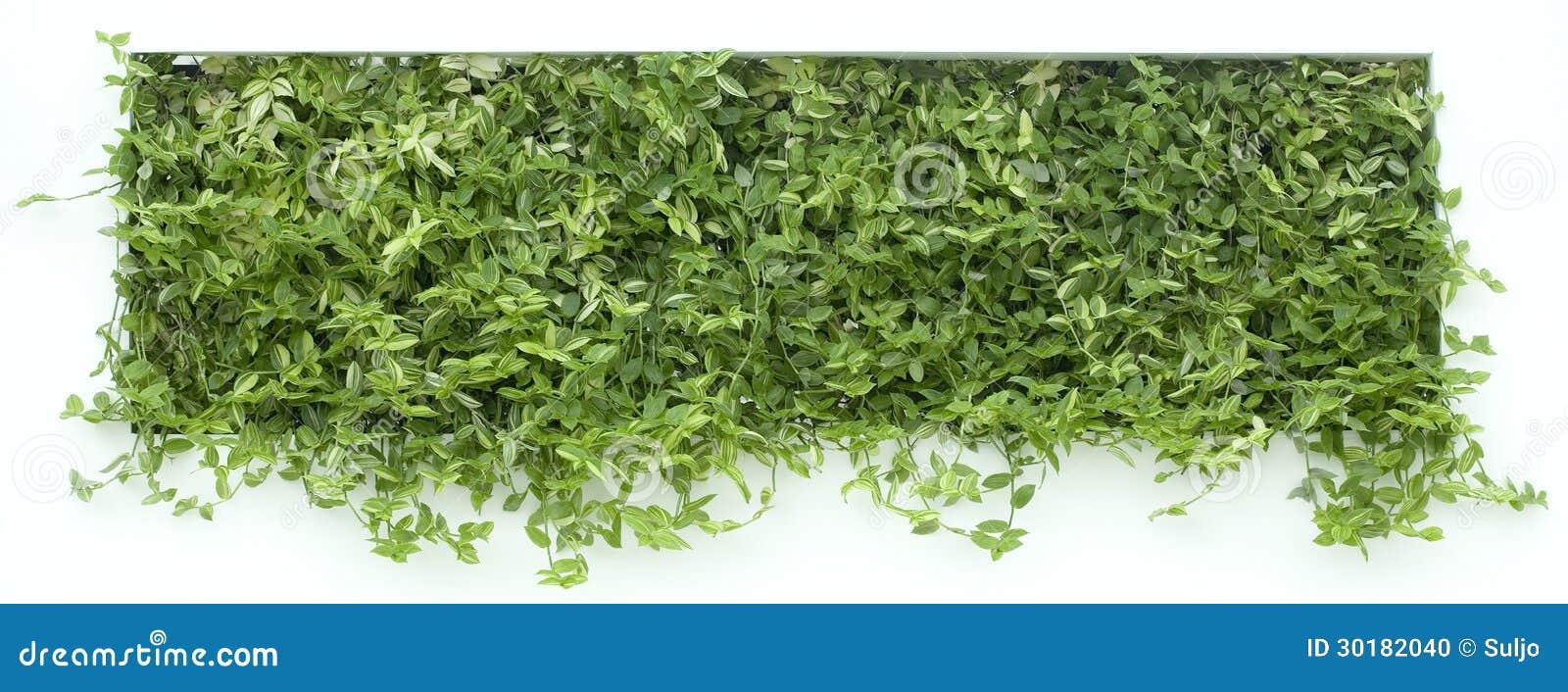 Vertical Garden Cutout Stock Photo Image 30182040