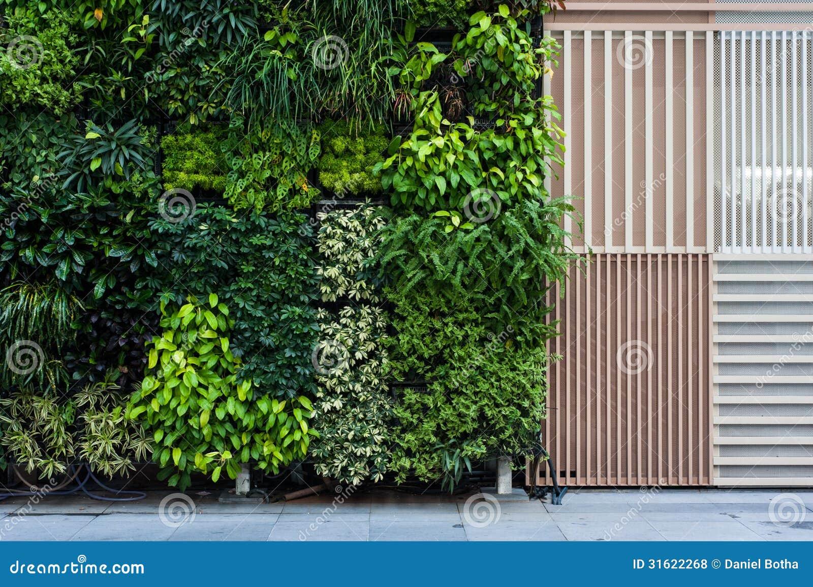 Vertical Garden Stock Photo Image Of Leaf Creeper Summer 31622268