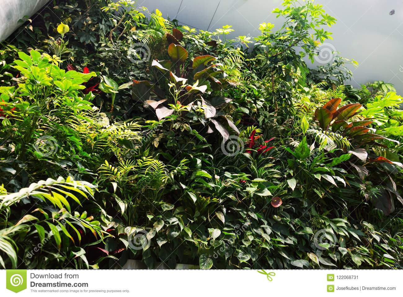 Vertical Garden Indoors, Living Green Wall With Flowers And Plants Under  Artificial Lighting