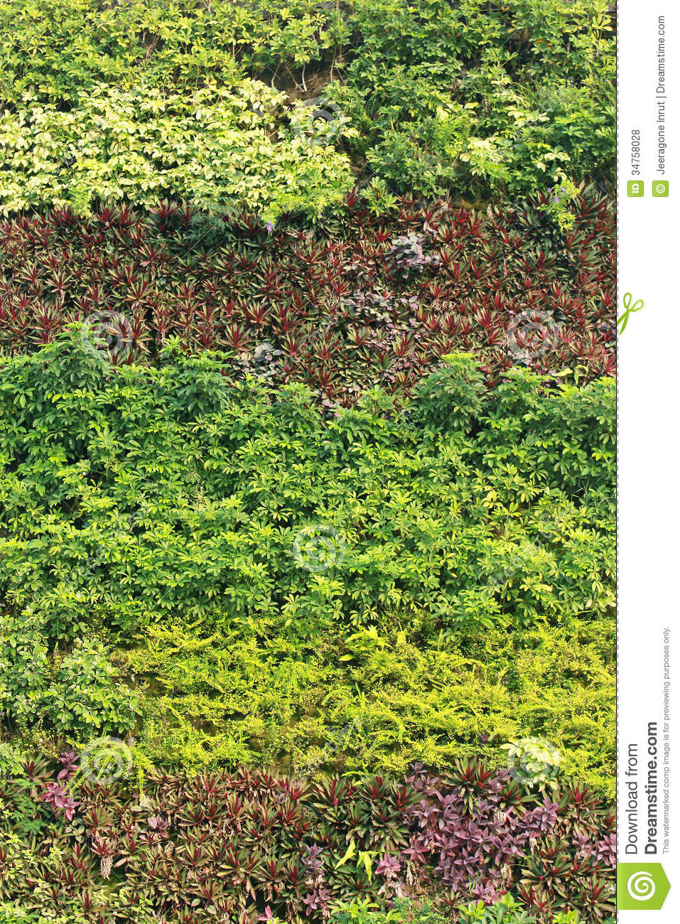 Vertical Garden Stock Photo Image Of Decoration Peace