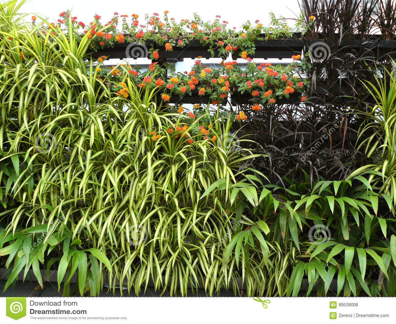 Vertical garden on plant gutter royalty free stock image for Small green outdoor plants