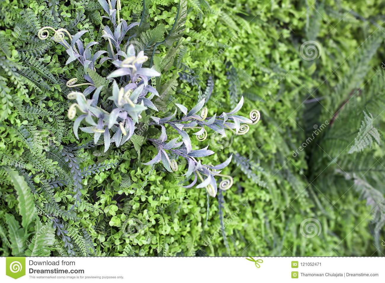 Vertical Garden Wall Stock Image Image Of Nature Leaf 121052471