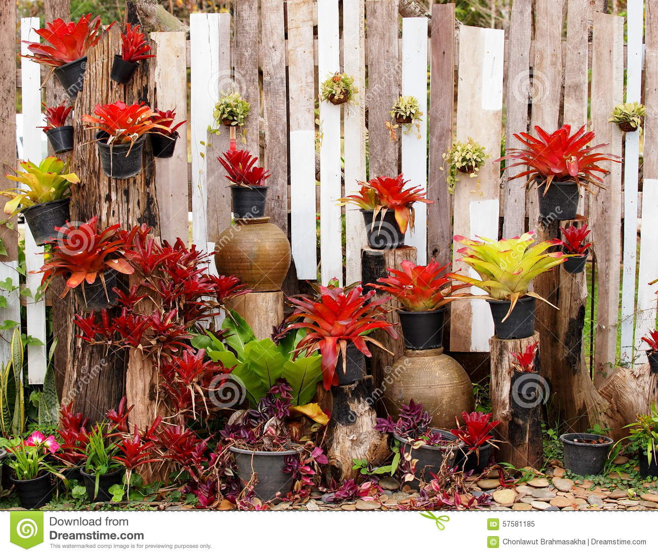 Vertical Garden On A Wooden Wall Outdoor With Decorative Plants And Garden  Plant Pot Hanging On The Wall Under Direct Sunlight On A Sunny Day
