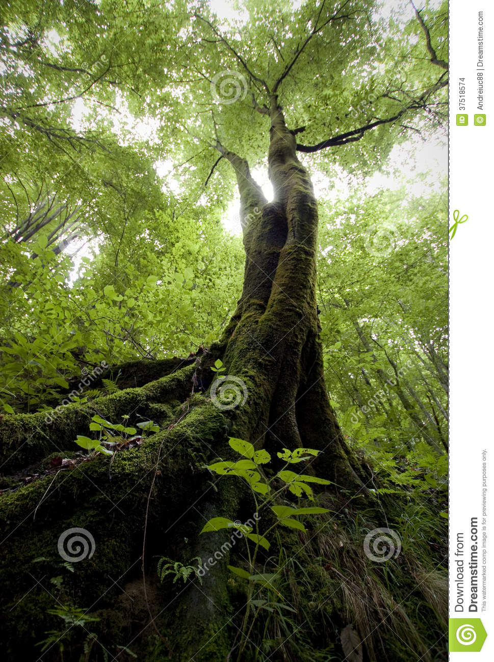 Vertical Photo Of A Tree With Green Moss In A Green Forest In ...