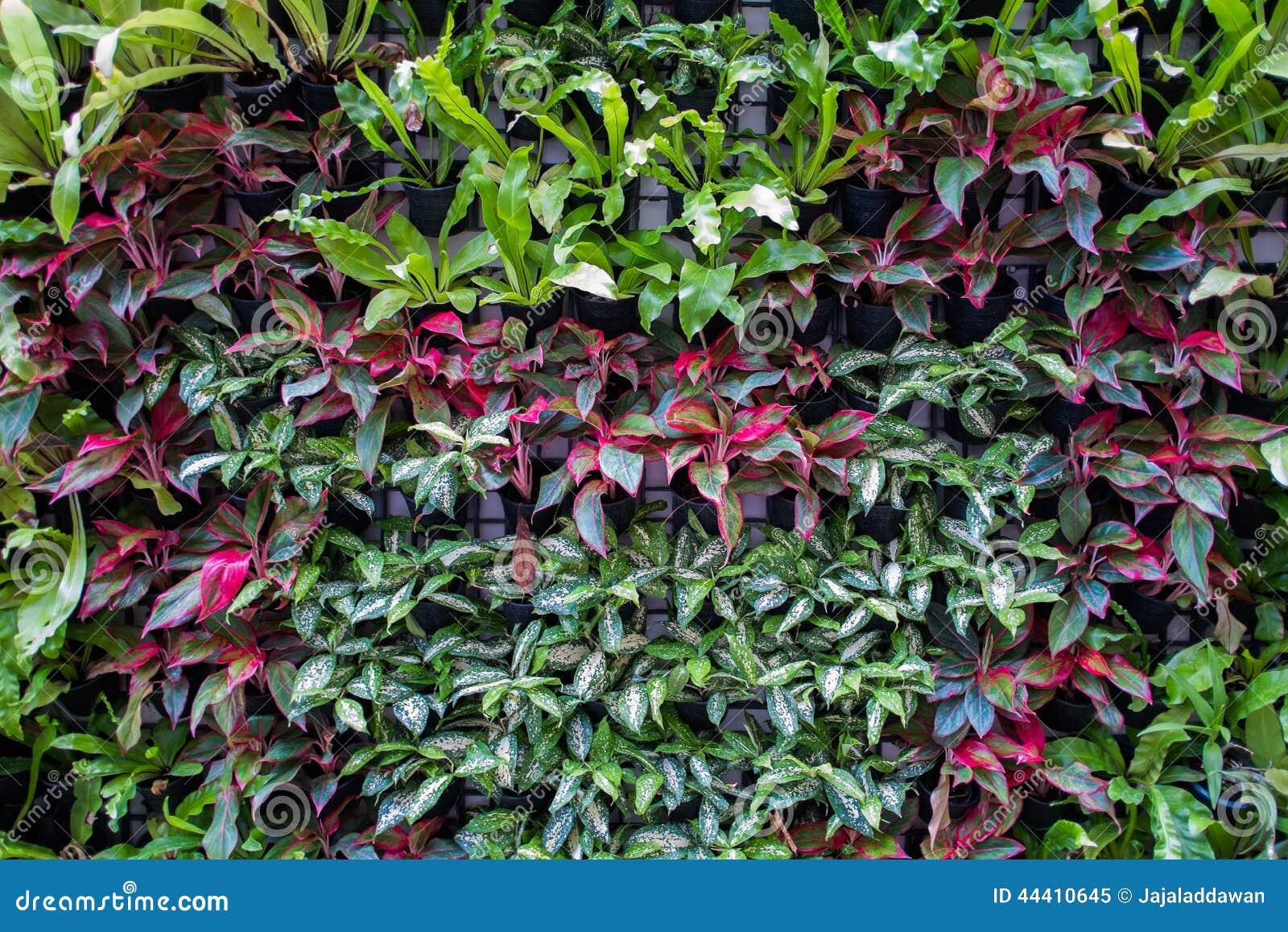 Vertical Tropical Garden Stock Photo Image 44410645