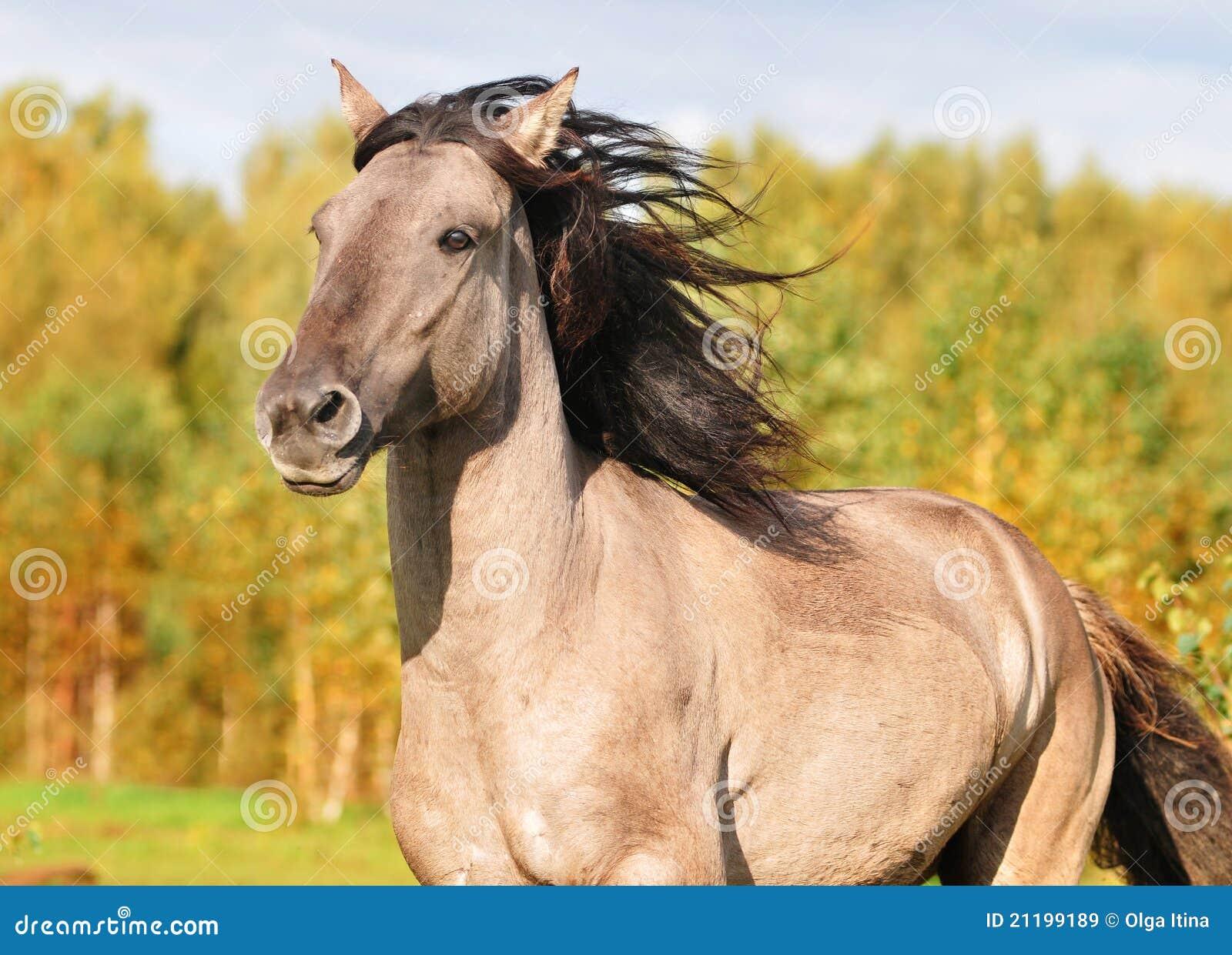 Verticale bachkire de cheval