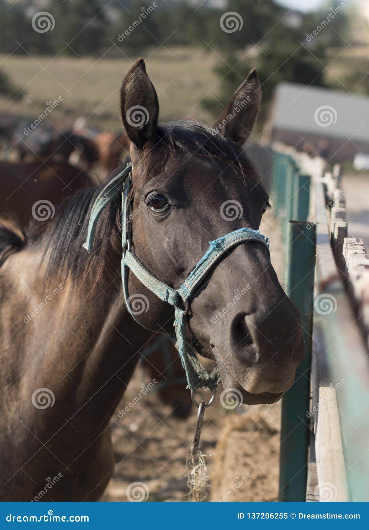 Verticale brune de cheval
